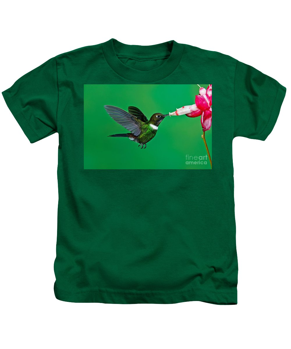 Gorgeted Sunangel Kids T-Shirt featuring the photograph Gorgeted Sunangel by Anthony Mercieca
