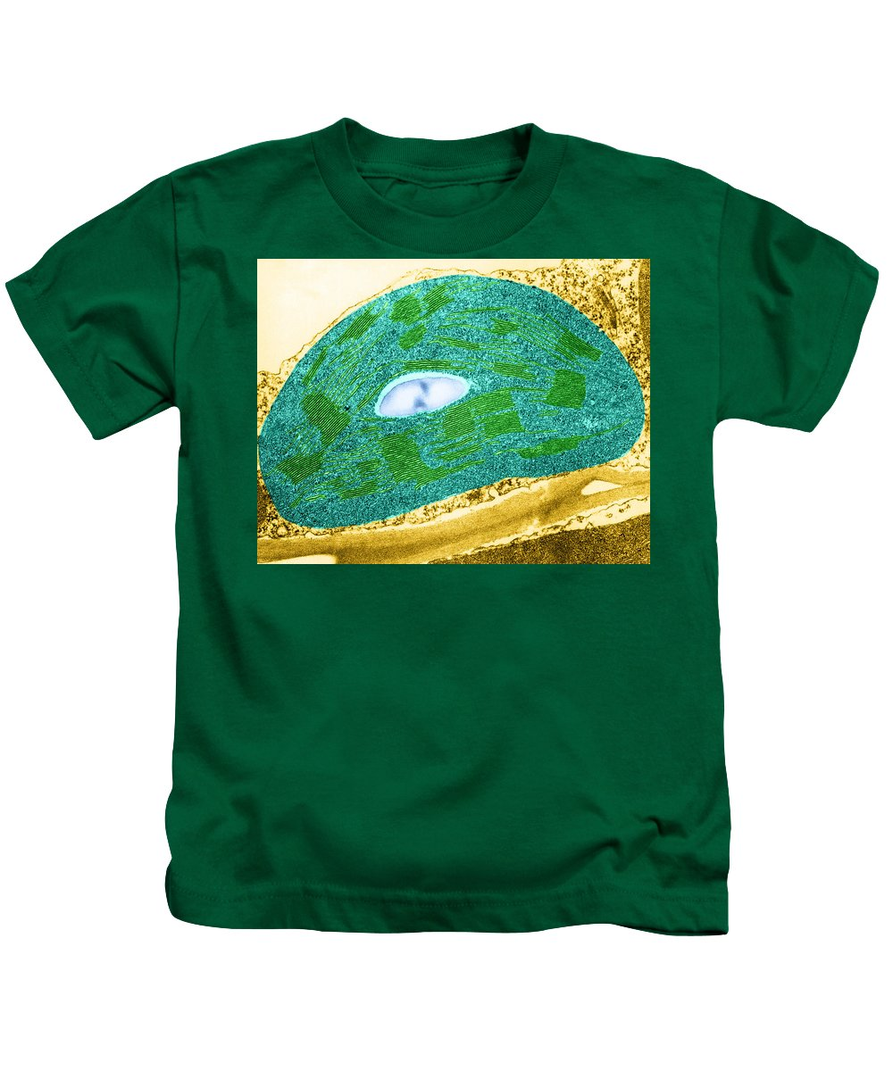 Science Kids T-Shirt featuring the photograph Tomato Chloroplast, Tem by Omikron