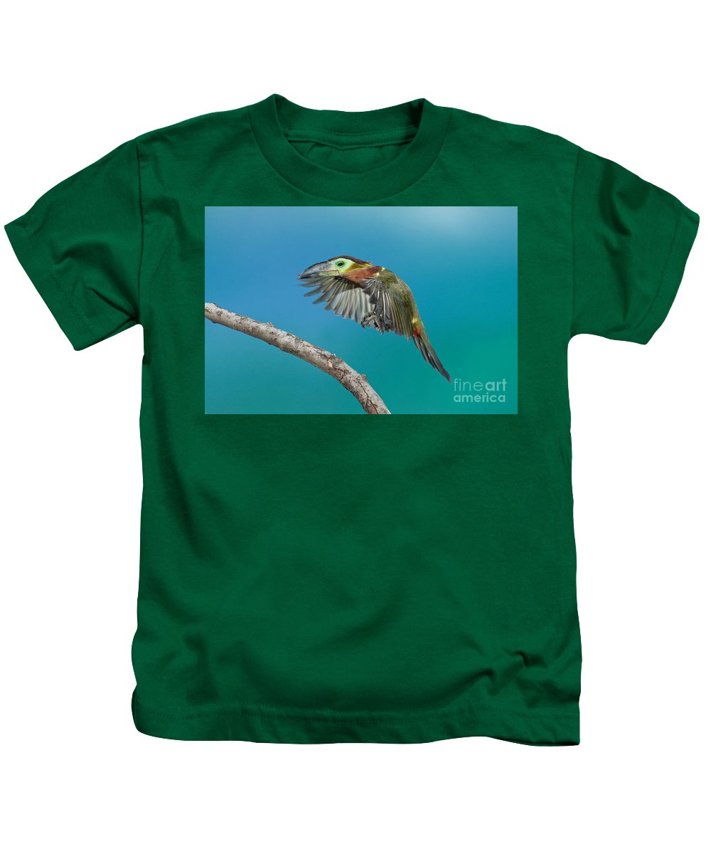 Animal Kids T-Shirt featuring the photograph Golden-collared Toucanet by Anthony Mercieca