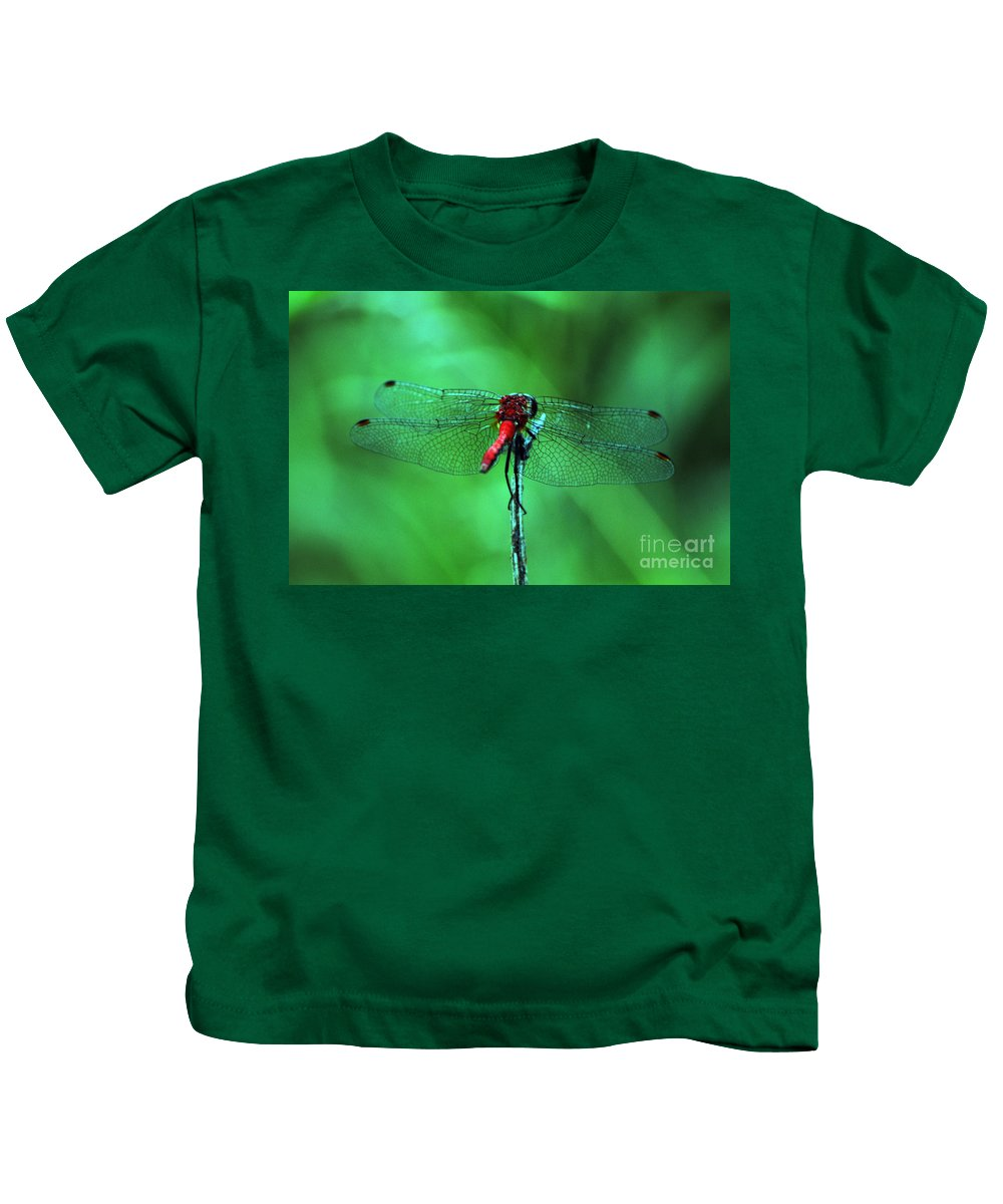 Wings Kids T-Shirt featuring the photograph Lace Wings by Kevin Fortier