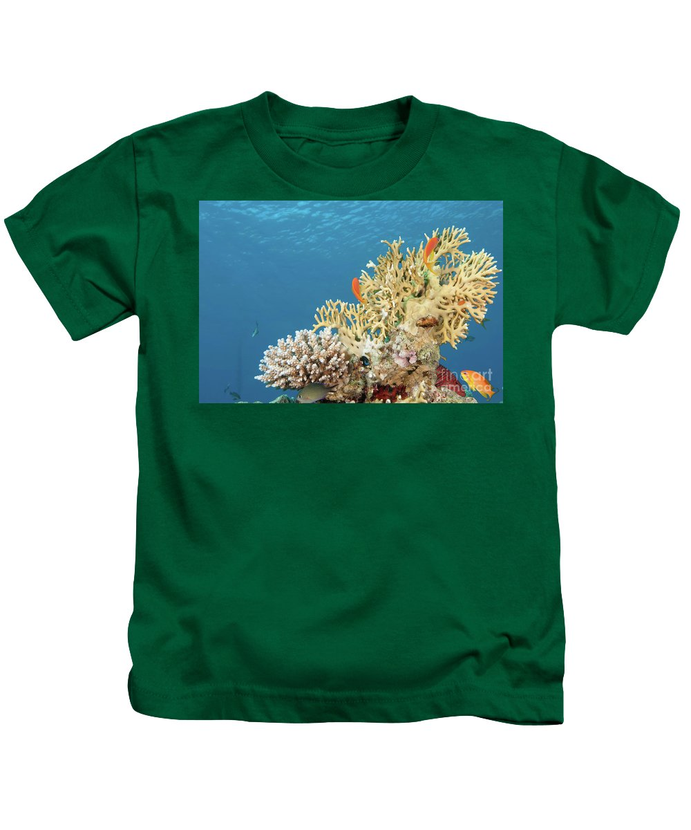 Eco System Kids T-Shirt featuring the photograph Coral Reef Eco System by Hagai Nativ