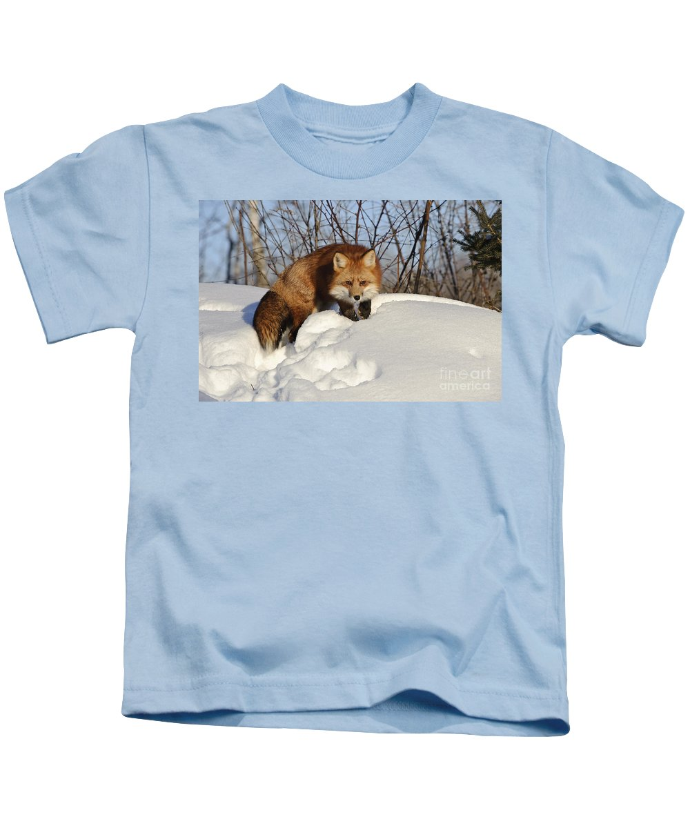 Minnesota Fauna Kids T-Shirt featuring the photograph Red Fox by John Shaw