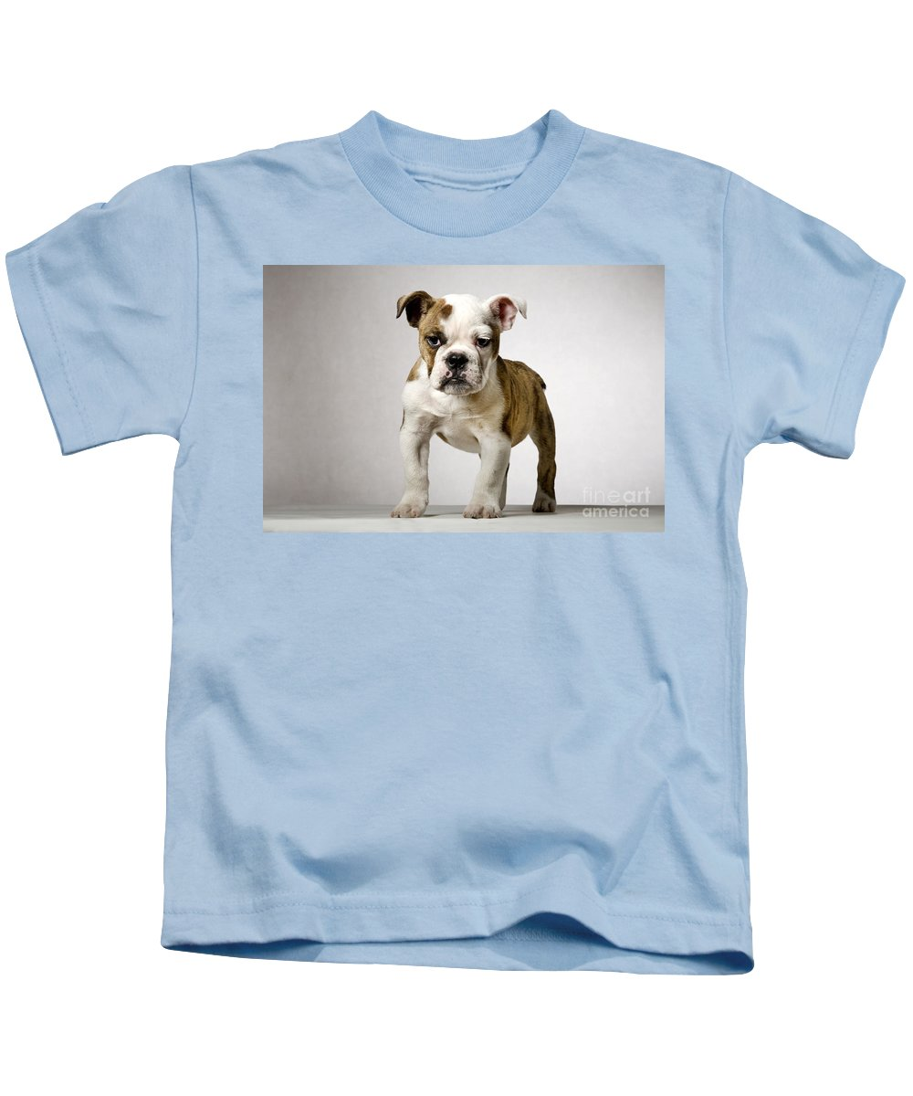English Bulldog Kids T-Shirt featuring the photograph 110307p152 by Arterra Picture Library