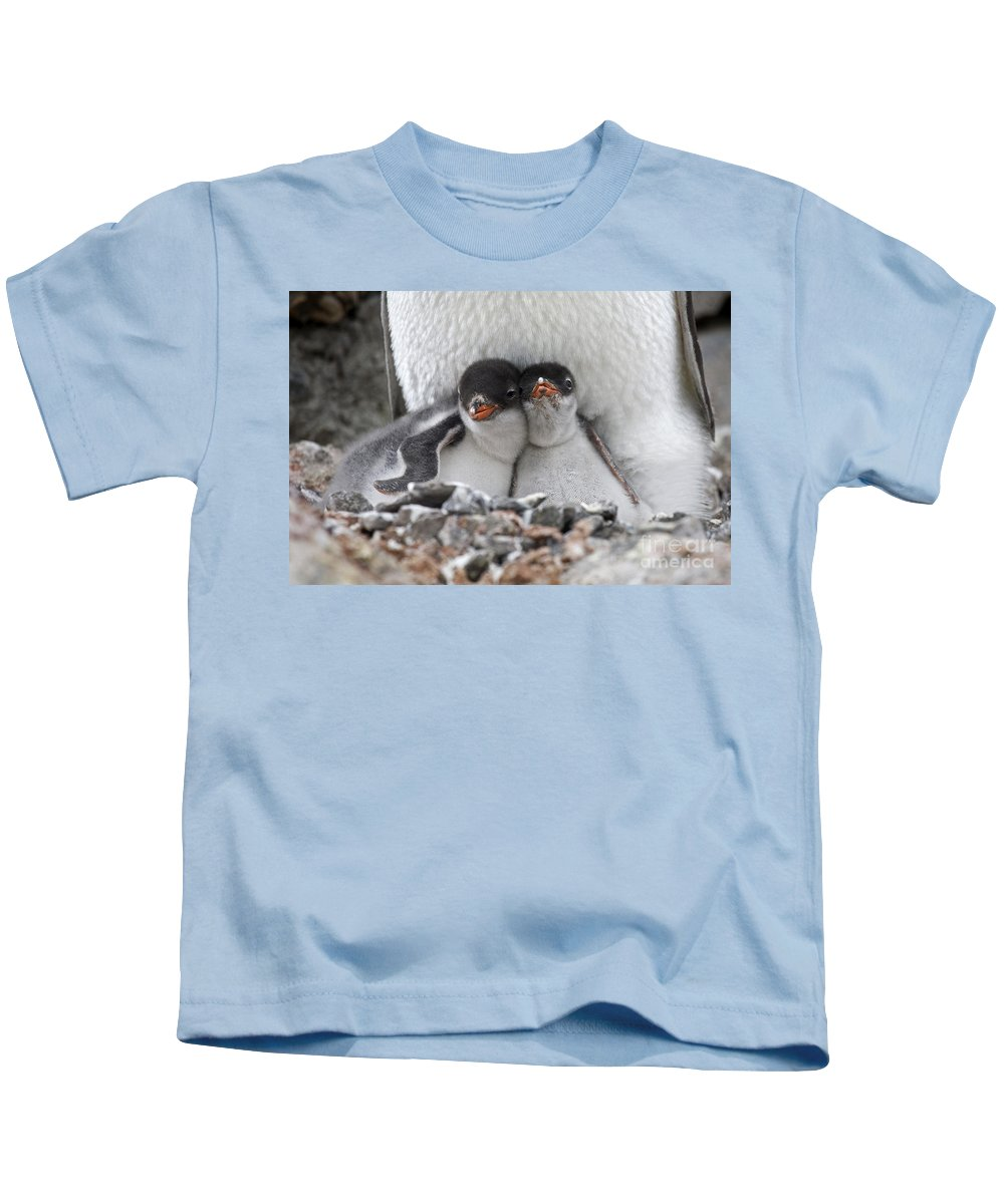 Port Lockroy Kids T-Shirt featuring the photograph 111130p166 by Arterra Picture Library