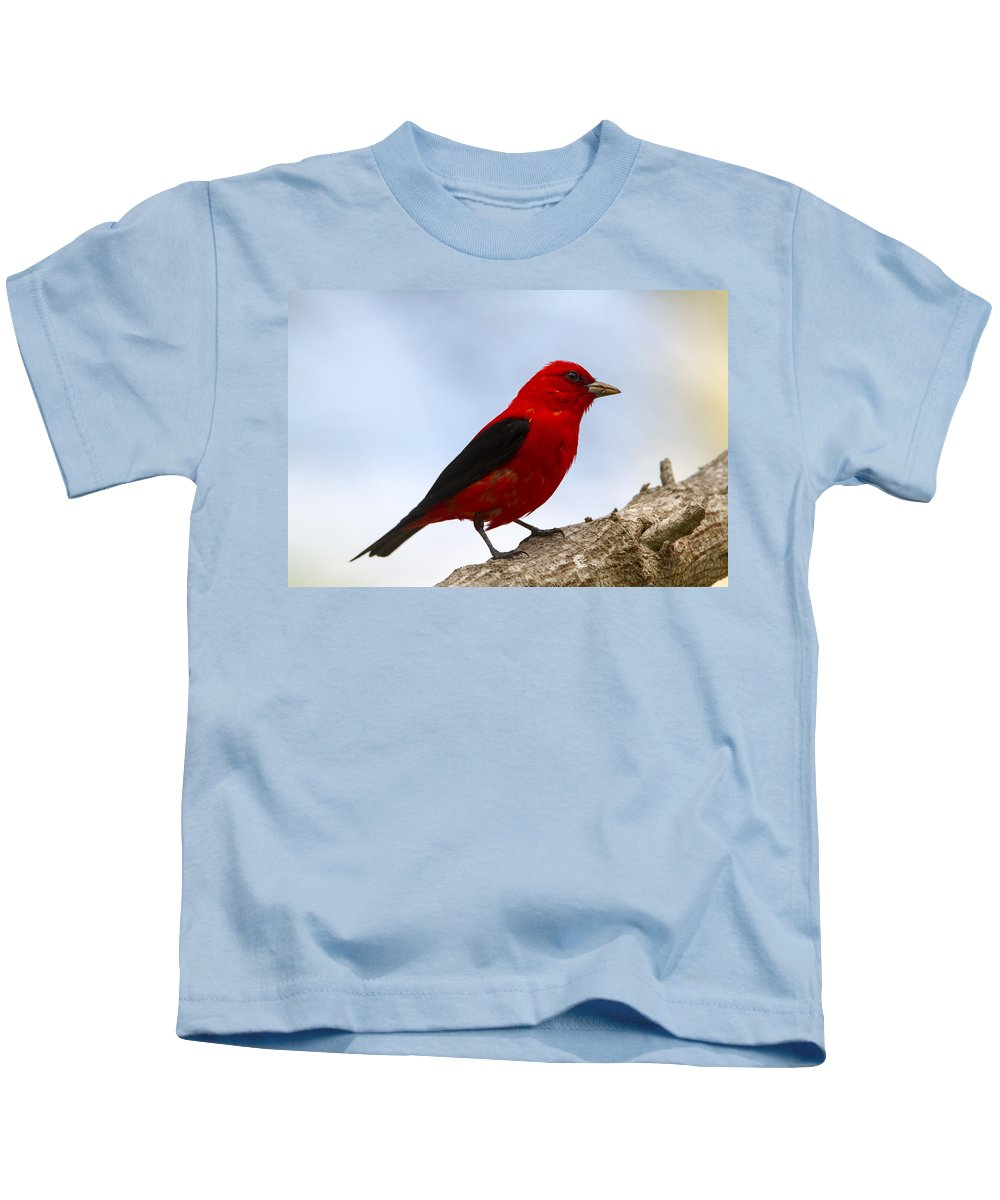 Doug Lloyd Kids T-Shirt featuring the photograph Scarlet Tanager by Doug Lloyd