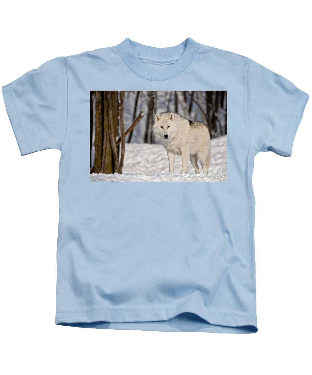 Arctic Wolf Photography Kids T-Shirt featuring the photograph Arctic Wolf by Wolves Only