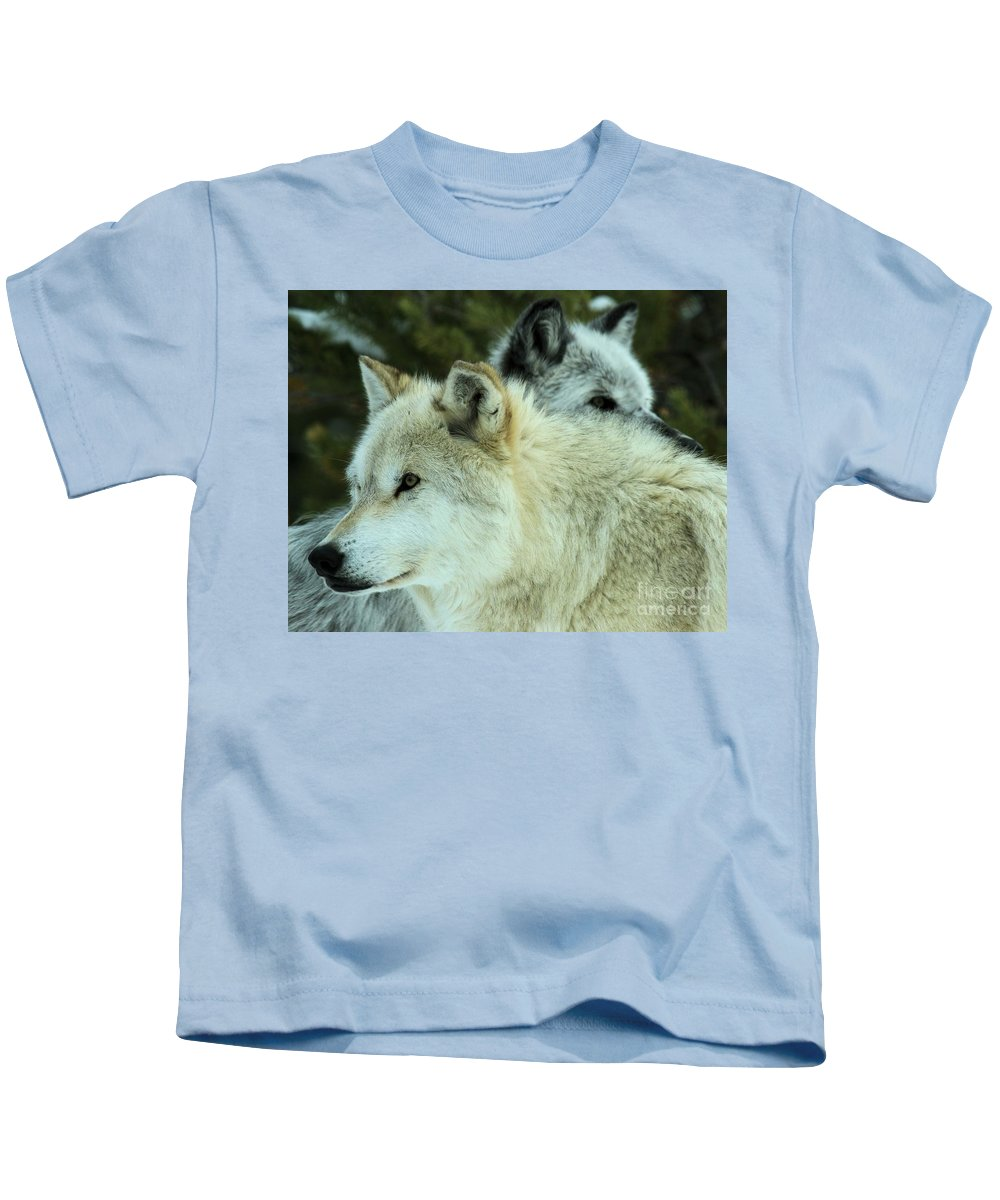 Montana Wolves Kids T-Shirt featuring the photograph Alpha In The Background by Adam Jewell