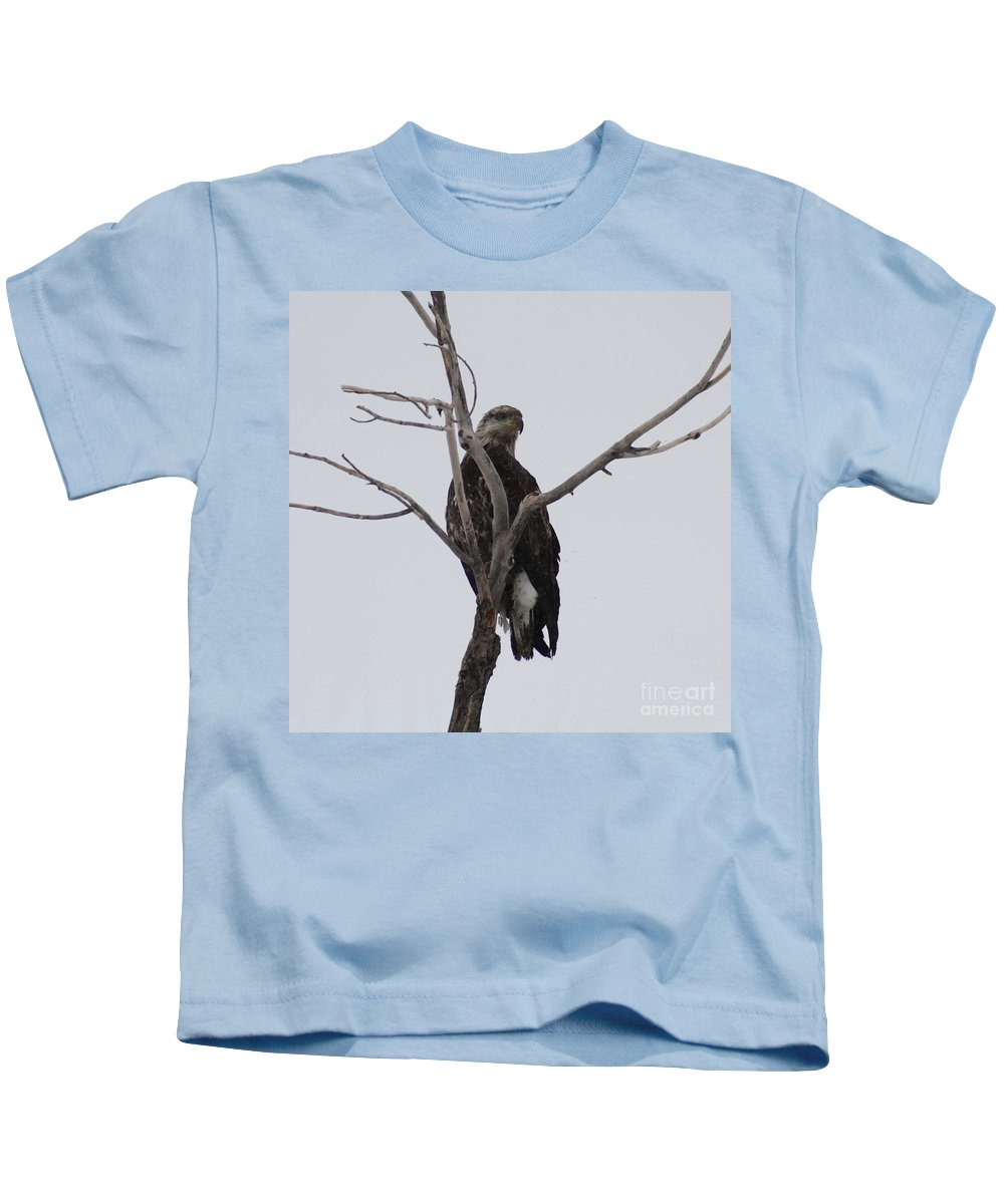 Bald Eagle Kids T-Shirt featuring the photograph Baby Bald Eagle by Brandi Maher