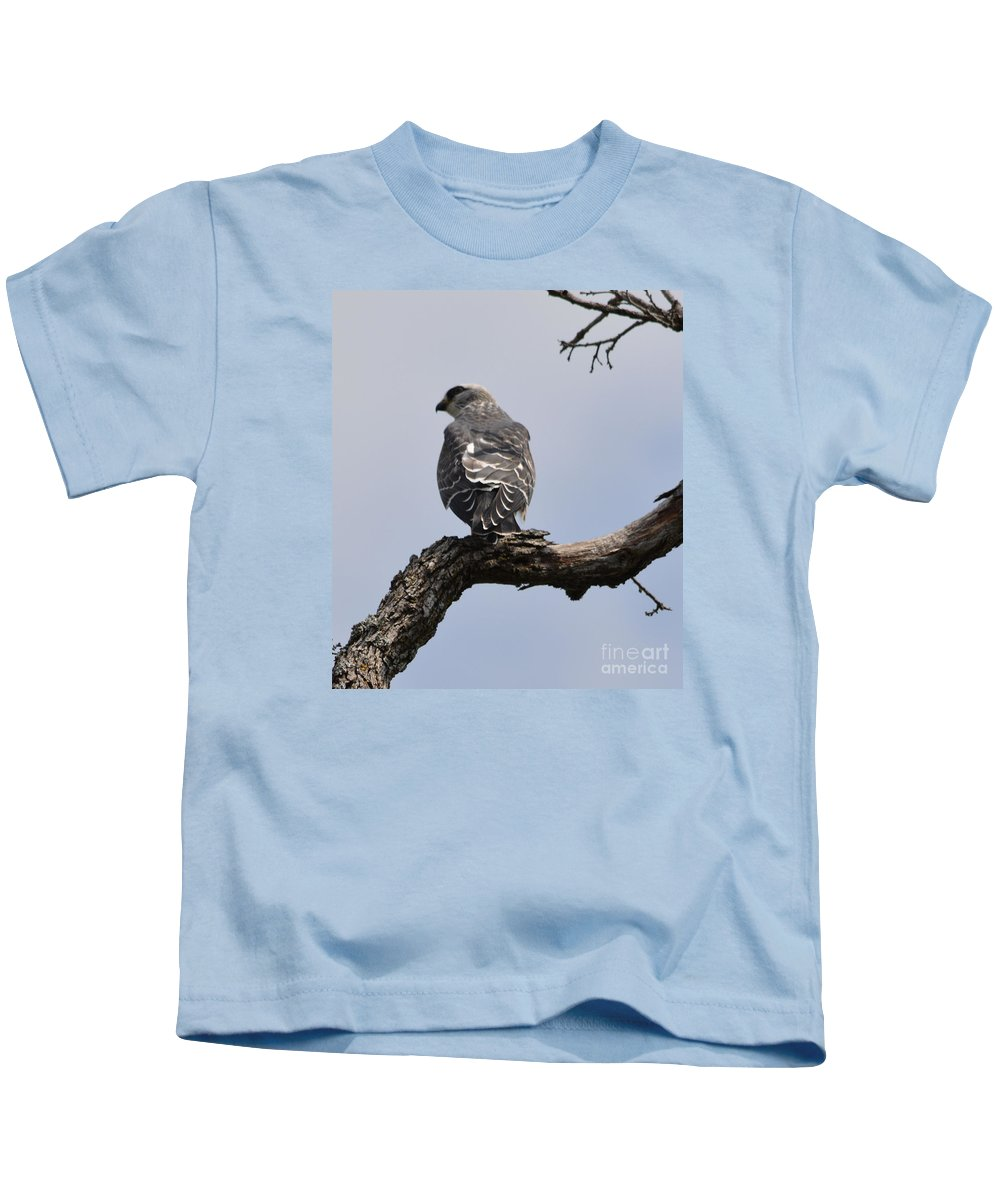 Cooper's Hawk Prints Kids T-Shirt featuring the photograph Cooper's Hawk by Ruth Housley