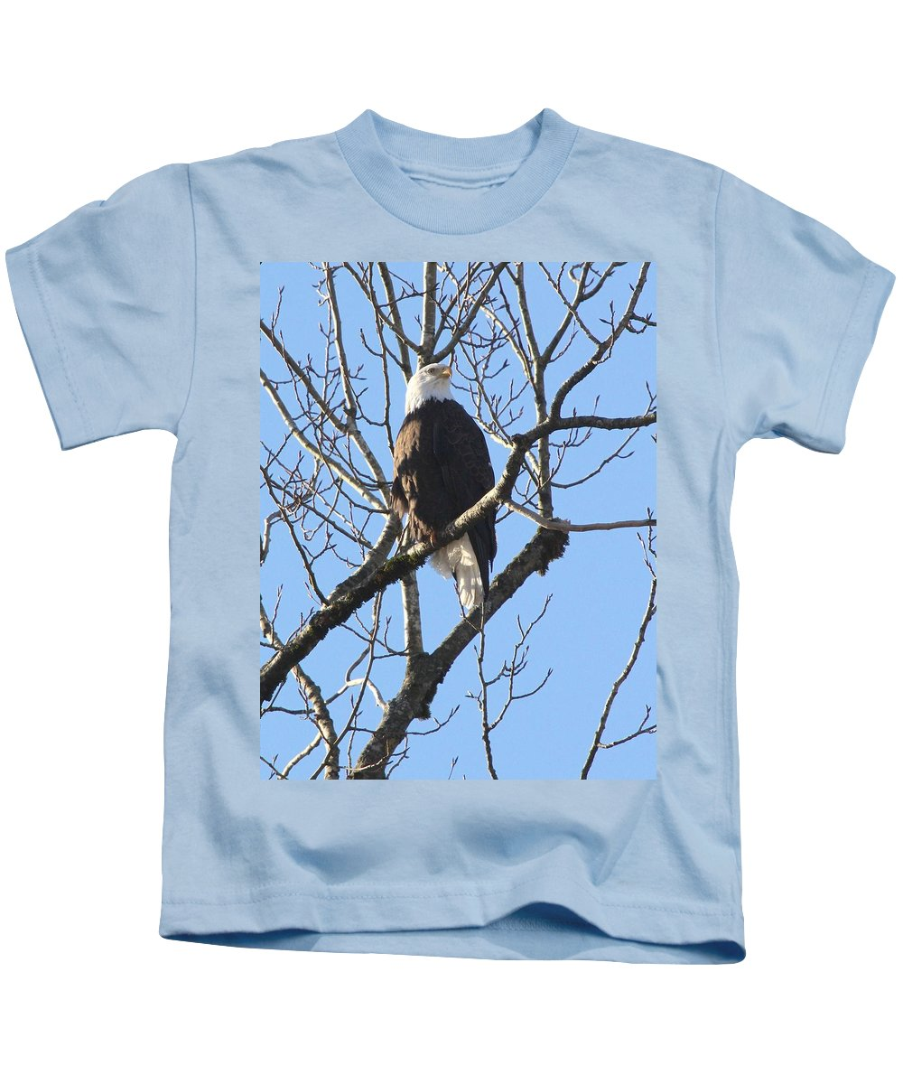Eagle Kids T-Shirt featuring the photograph Bald Eagle Sunny Perch by Ian Mcadie