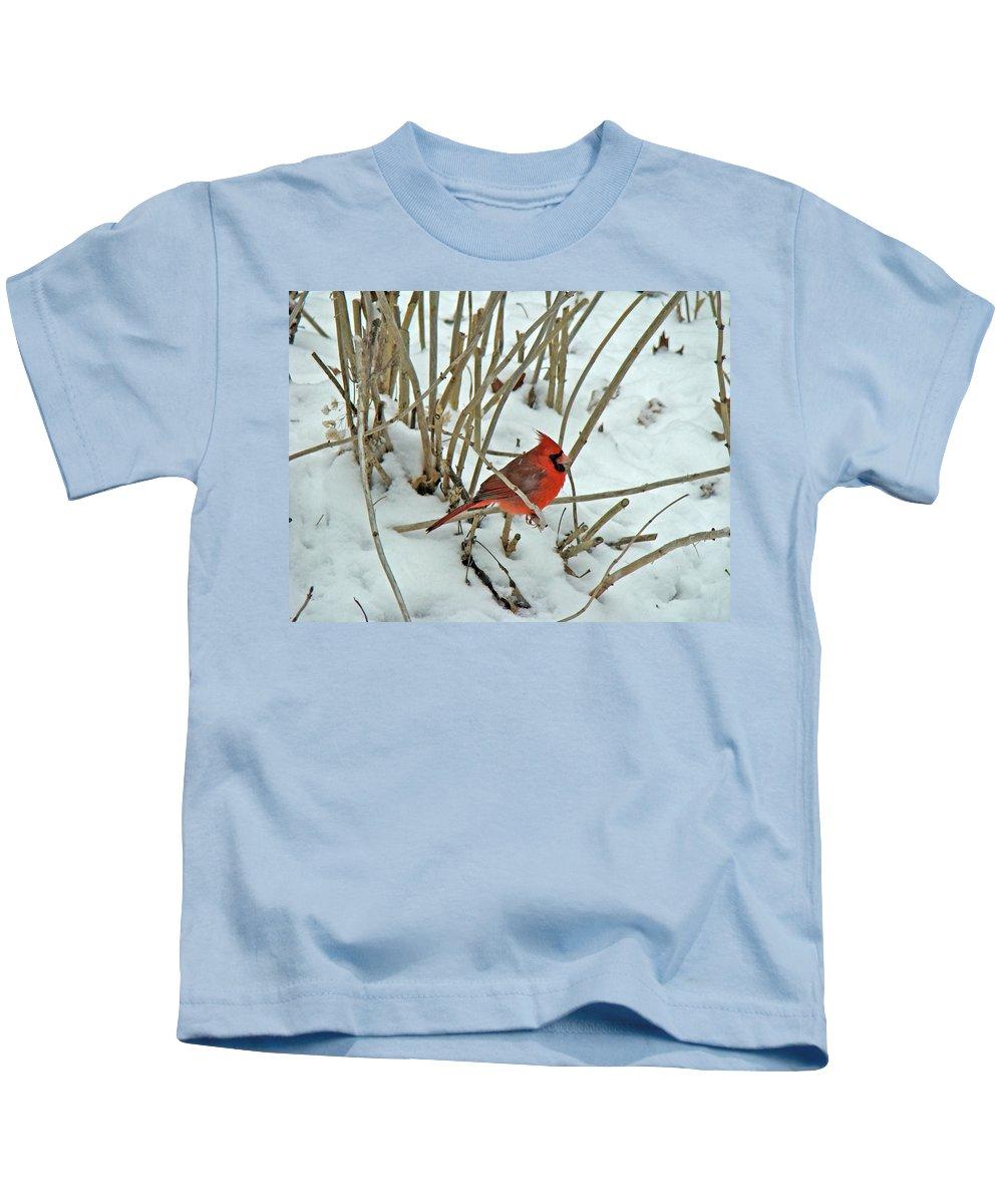 Cardinal Kids T-Shirt featuring the photograph Eastern Cardinal - Cardinalis Cardinalis by Mother Nature