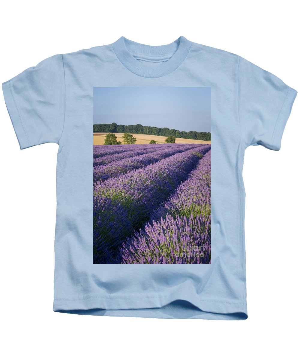 Cotswolds Kids T-Shirt featuring the photograph English Lavender by Brian Jannsen