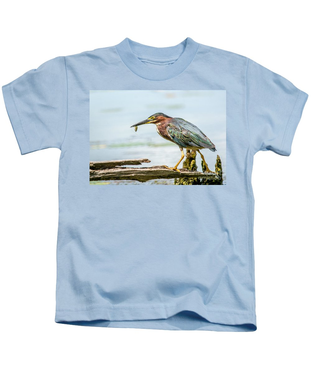 Green Feathers Kids T-Shirt featuring the photograph Green Heron Perfection by Cheryl Baxter