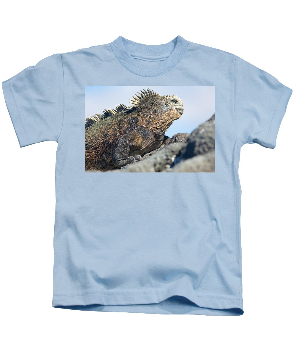 Galapagos Marine Iguana Kids T-Shirt featuring the photograph Marine Iguana by Allan Morrison