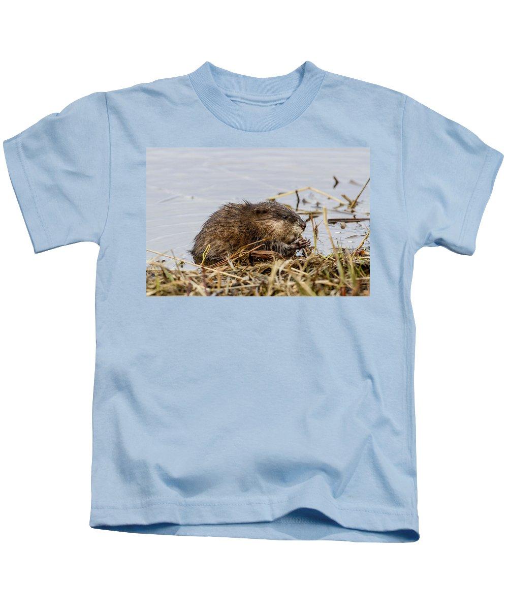 Alaska Kids T-Shirt featuring the photograph Muskrat by Doug Lloyd