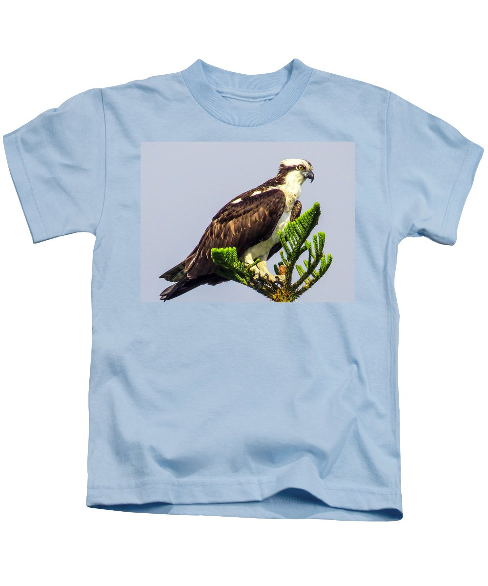 Sea Hawk Kids T-Shirt featuring the photograph Osprey by Zina Stromberg