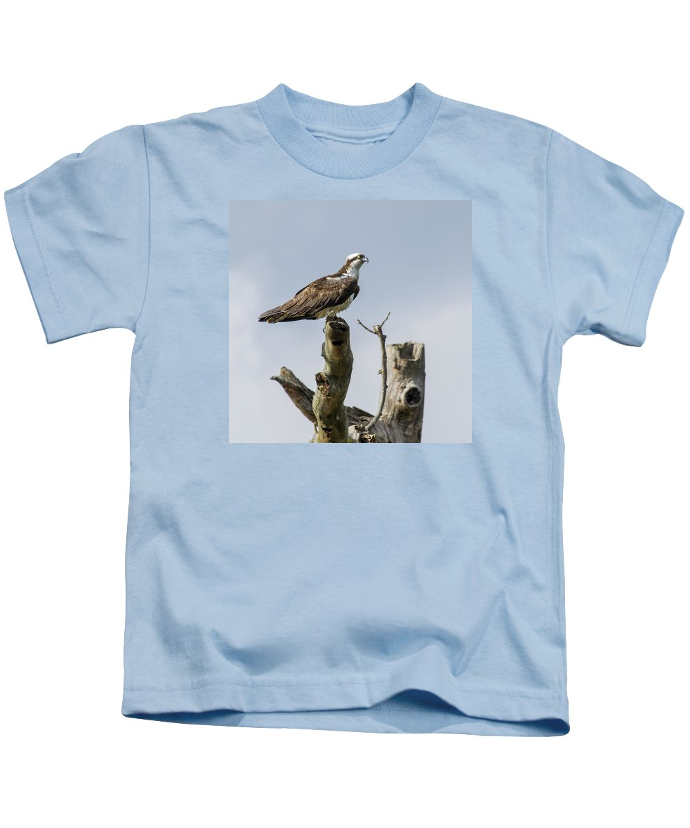 Osprey Kids T-Shirt featuring the photograph Sky Hunter 2 by David Lester