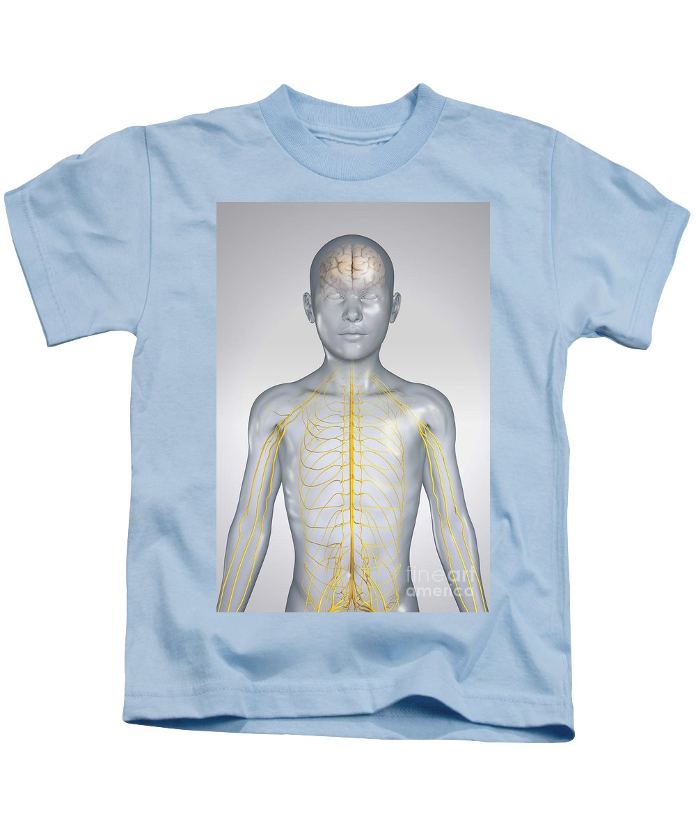 Transparency Kids T-Shirt featuring the photograph The Nervous System Child by Science Picture Co