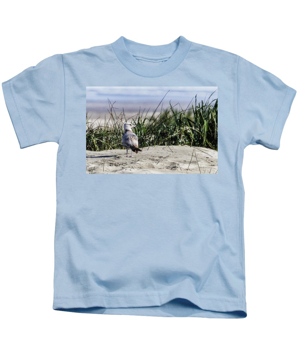 Seagull Kids T-Shirt featuring the photograph Young Seagull No. 1 by Belinda Greb