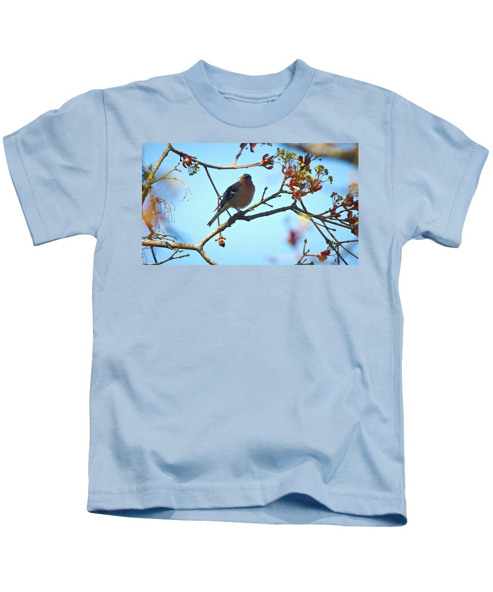 Isosuo Kids T-Shirt featuring the photograph Chaffinch by Jouko Lehto