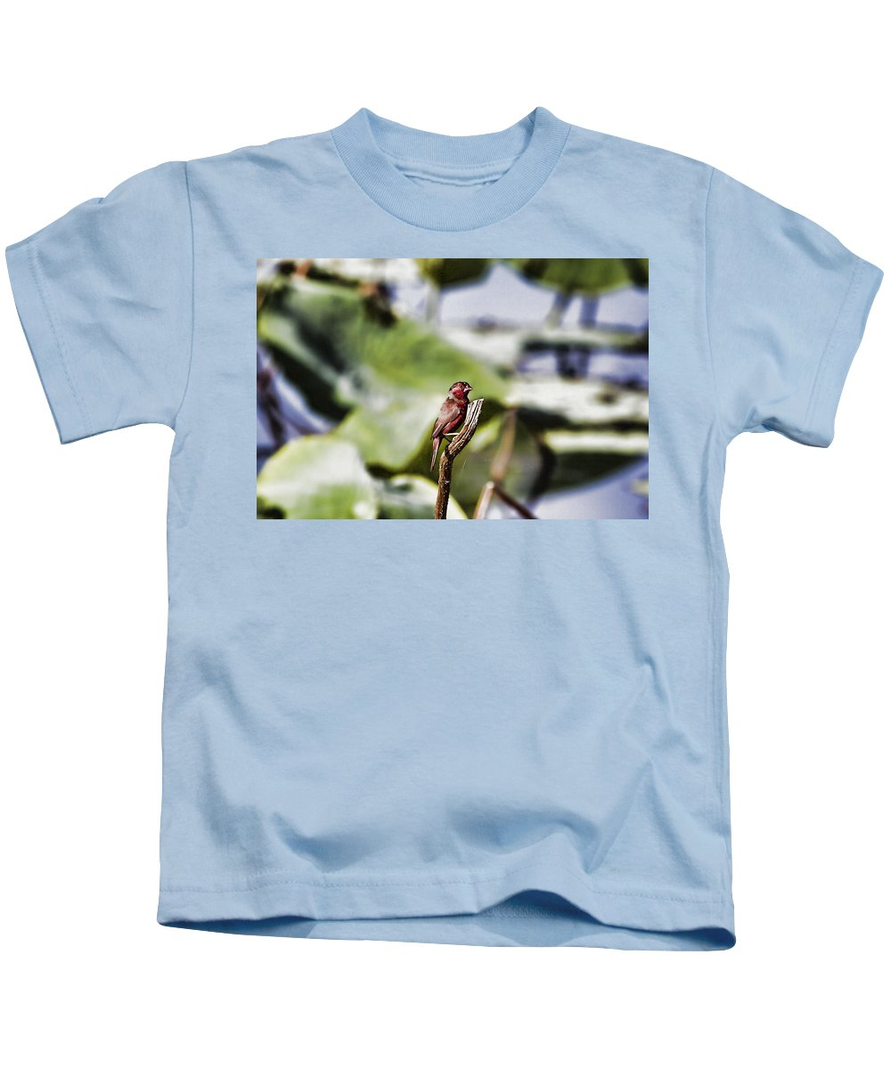 Red Finch Kids T-Shirt featuring the photograph Red Faced by Douglas Barnard