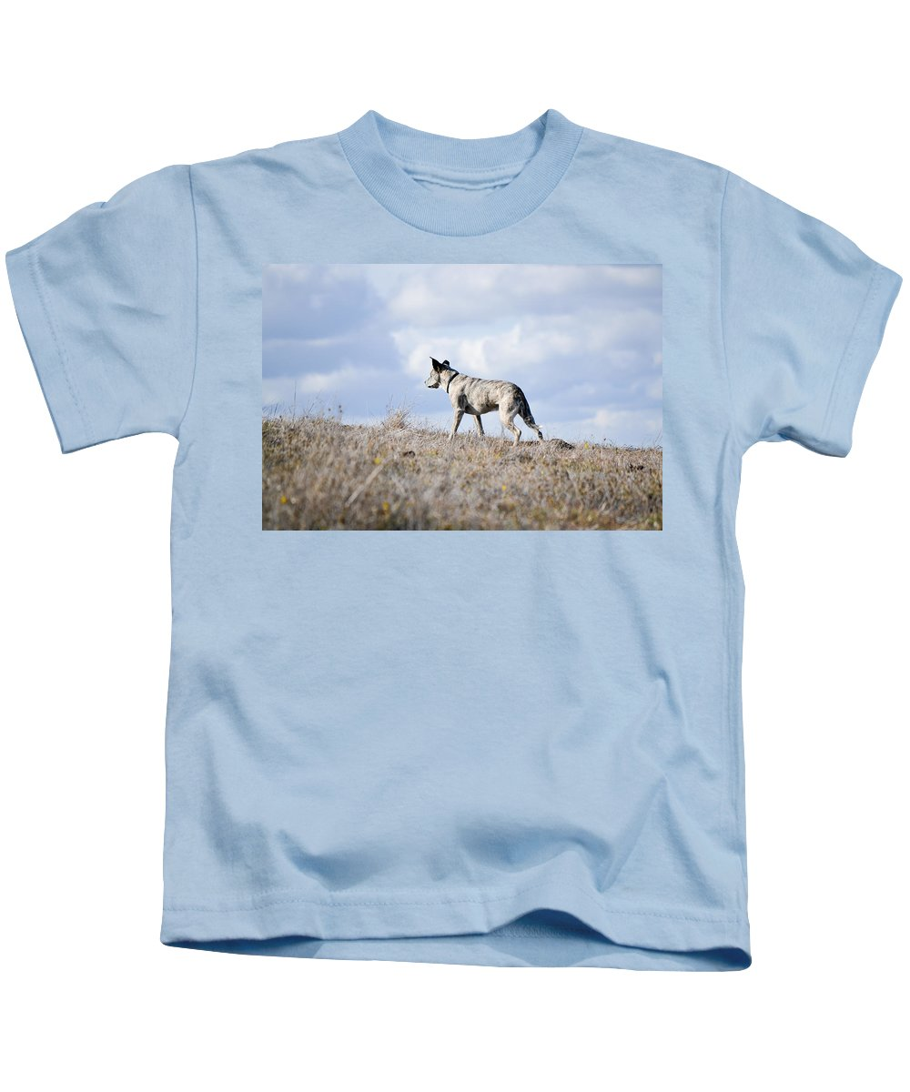 Dog Kids T-Shirt featuring the photograph Alpha Dog by Karen W Meyer