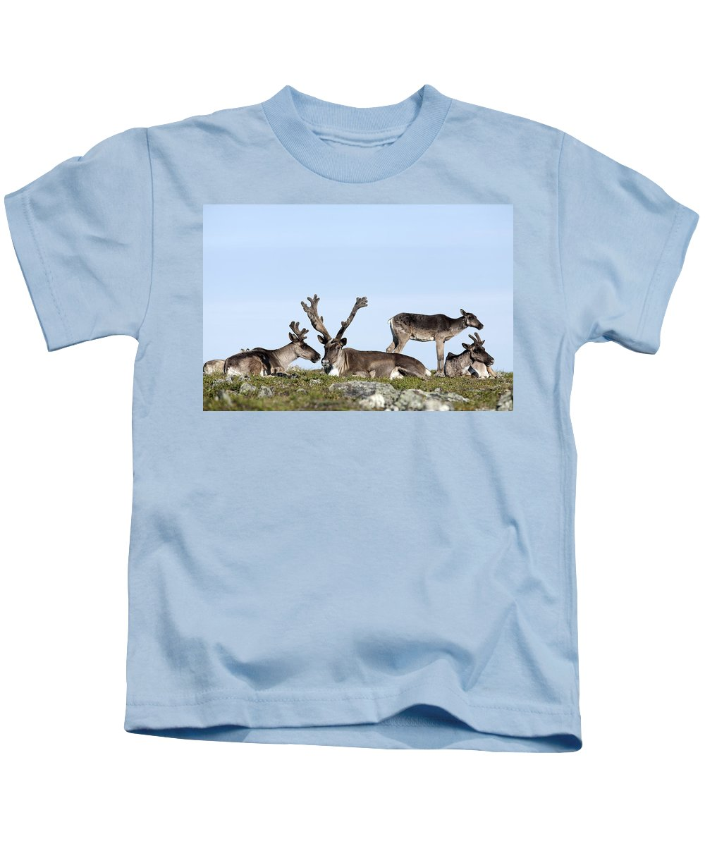Antler Kids T-Shirt featuring the photograph Group Of Caribou Resting On Alpine by Philippe Henry