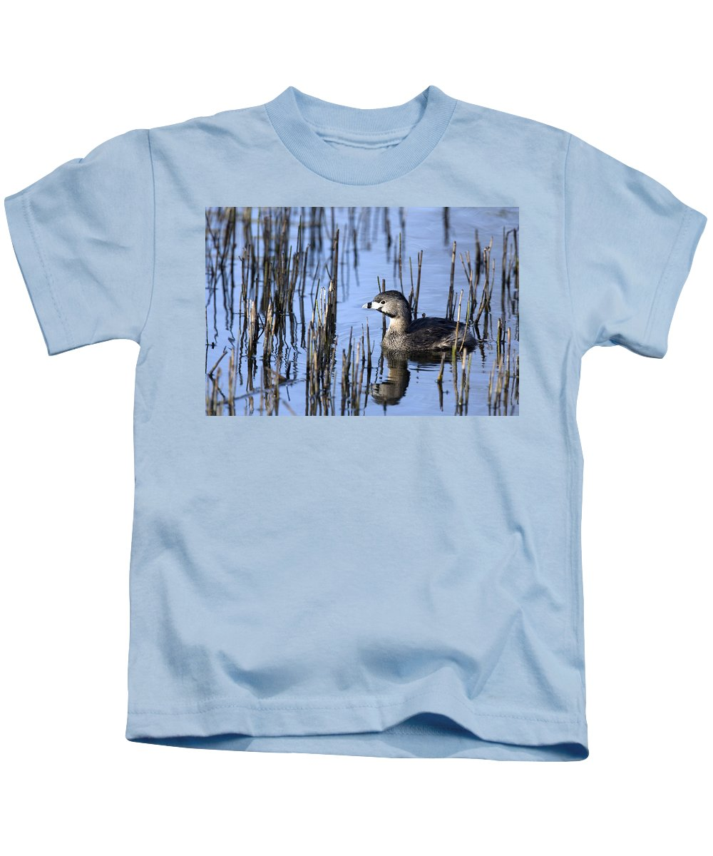 Bog Kids T-Shirt featuring the photograph Pied-billed Grebe, Montreal Botanical by Philippe Henry