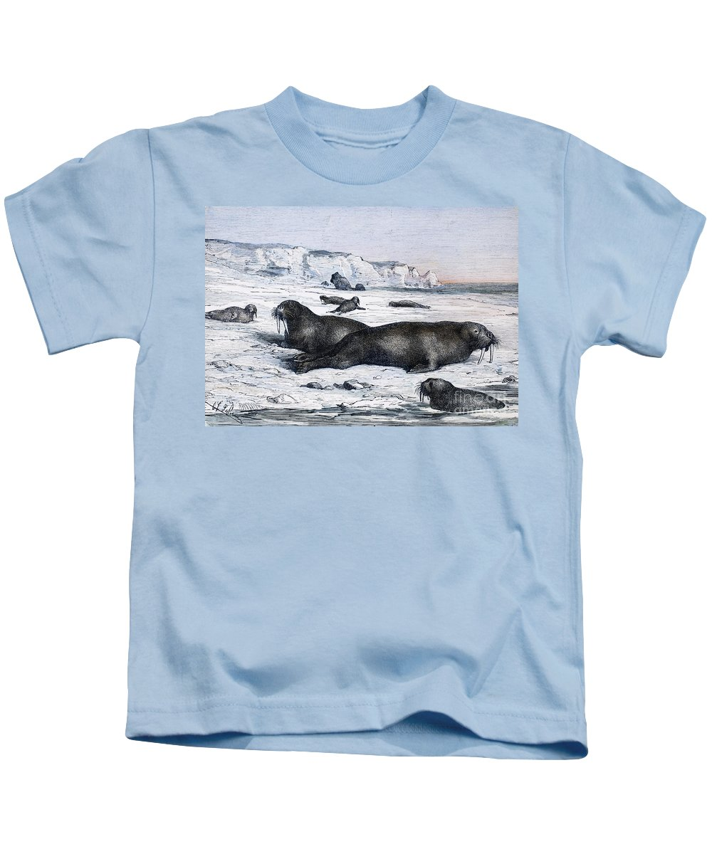 19th Century Kids T-Shirt featuring the photograph Walruses On Ice Field by Granger