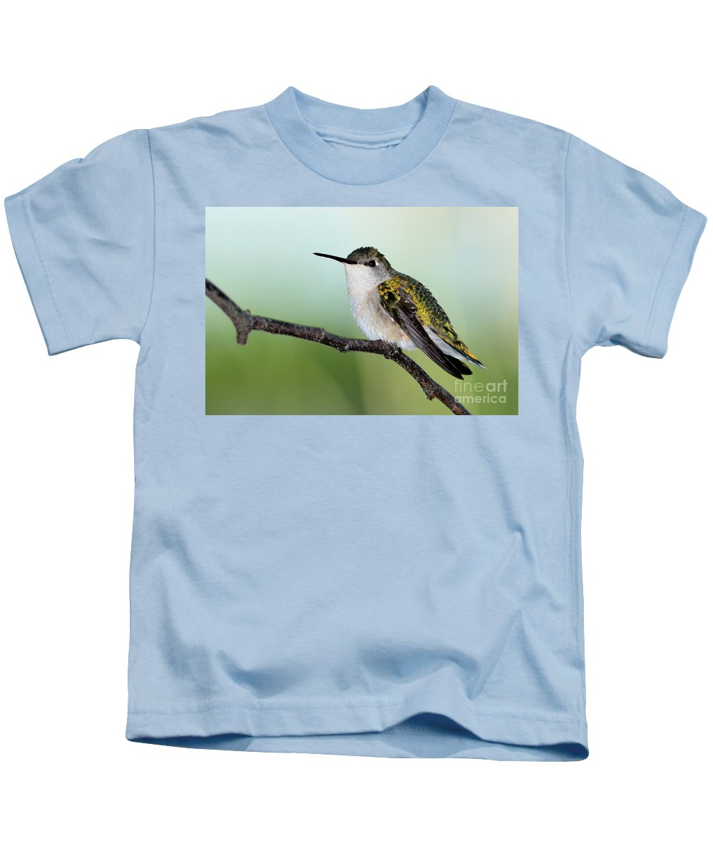 Ruby-throated Hummingbird Kids T-Shirt featuring the photograph At Rest by Betty LaRue
