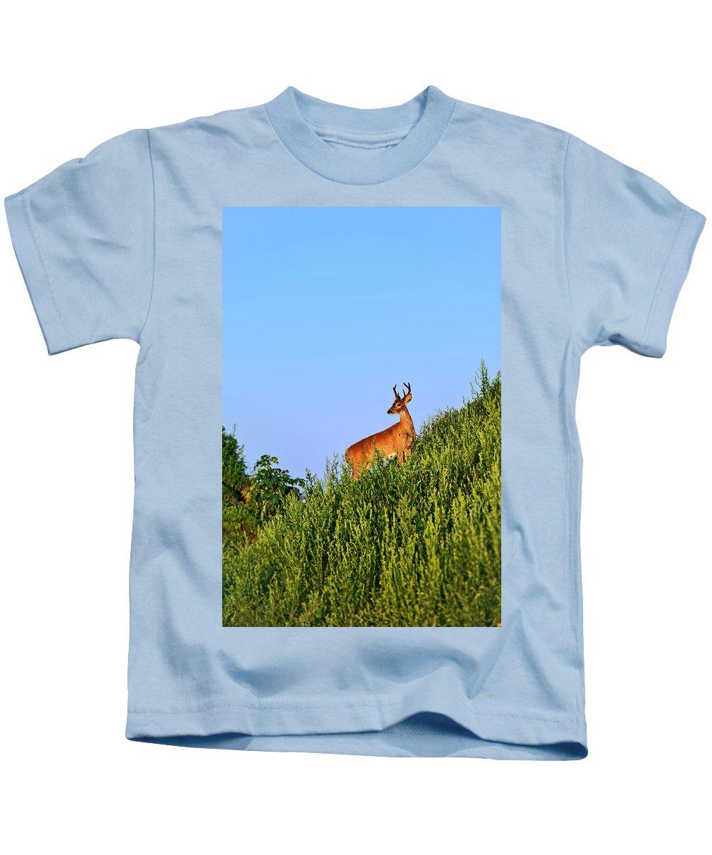 Odocoileus Virginianus Kids T-Shirt featuring the photograph Deer Buck. by John Greim