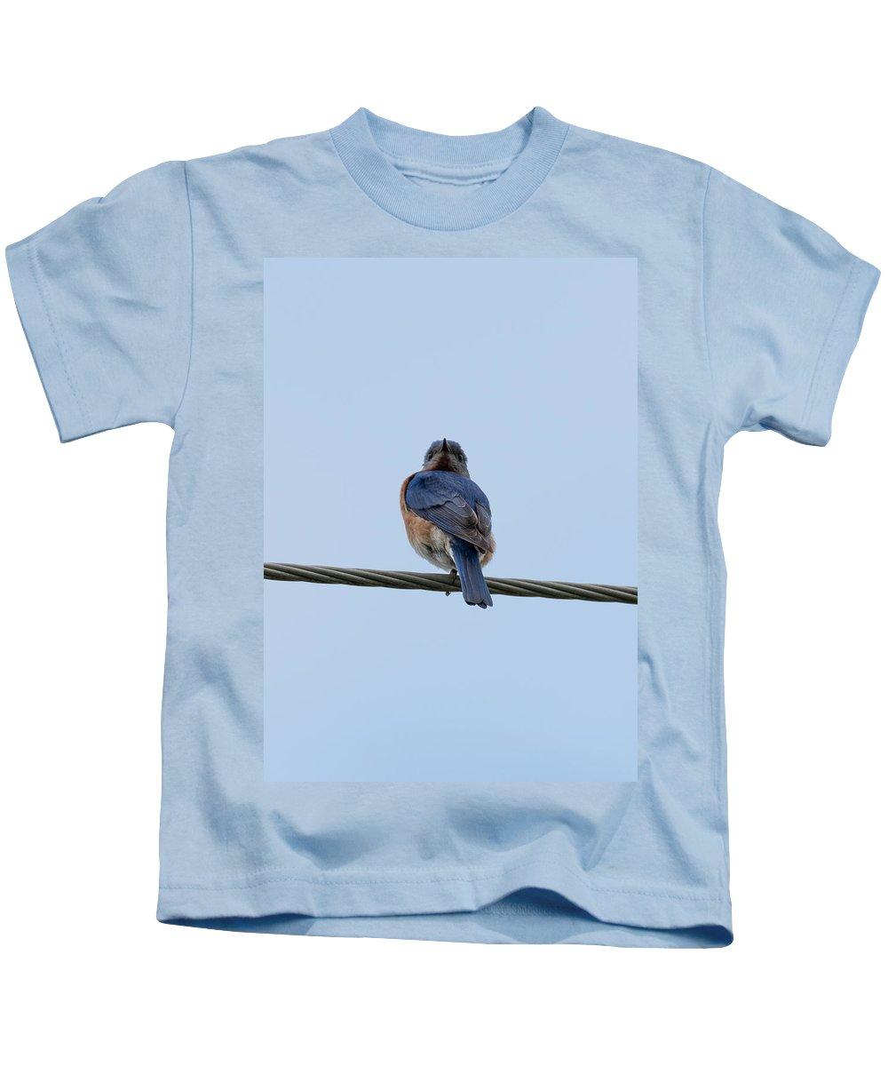 Bluebird Kids T-Shirt featuring the photograph Eastern Bluebird by Jan M Holden