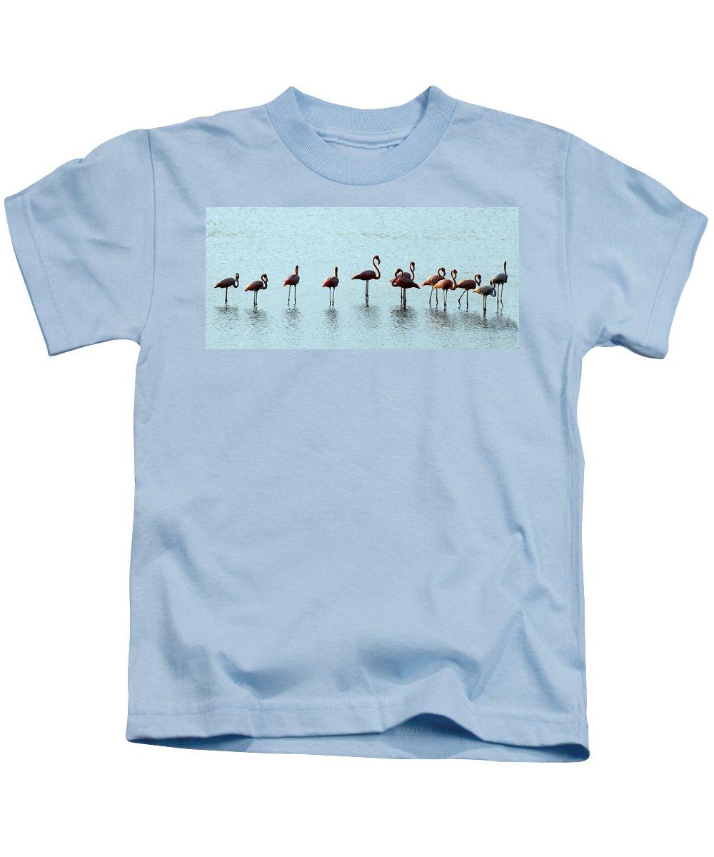 Flamingo Kids T-Shirt featuring the photograph Flamingo Family by Galeria Trompiz