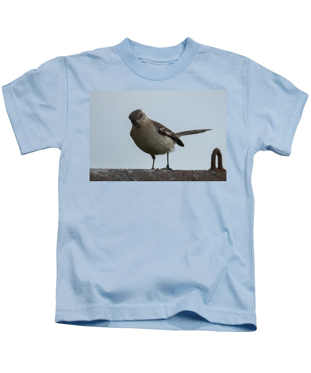 Northern Mockingbird Kids T-Shirt featuring the photograph Northern Mockingbird by Jan M Holden