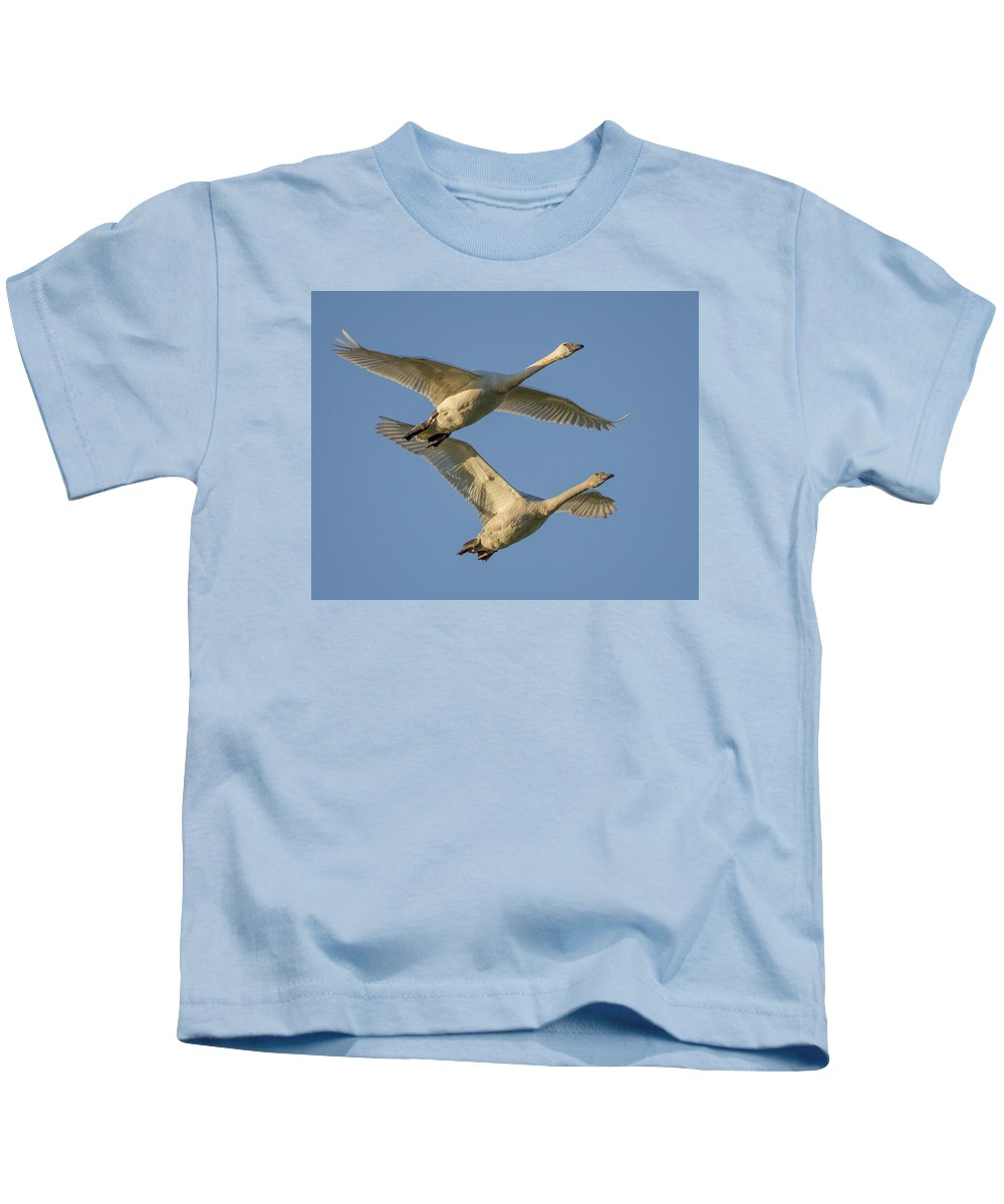 Trumpeter Kids T-Shirt featuring the photograph Trumpeter Swans by Bob Stevens