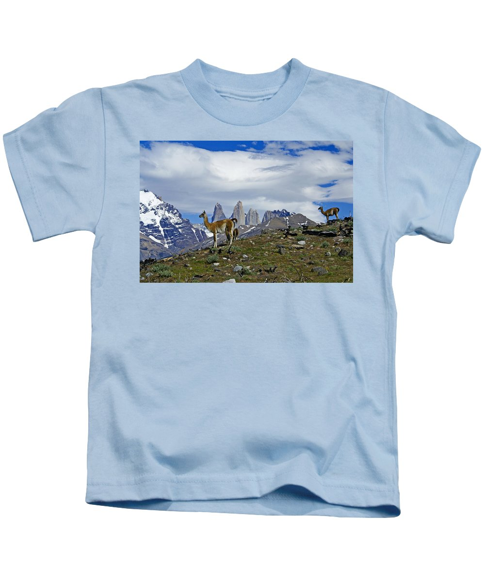 Patagonia Kids T-Shirt featuring the photograph Guanacos In Torres Del Paine by Michele Burgess