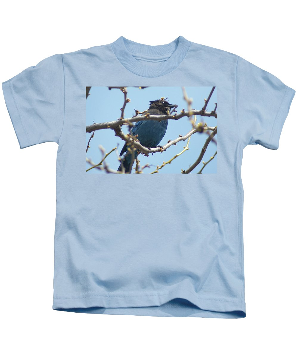 Birds. Fowl Kids T-Shirt featuring the photograph A Noisy Jay by Jeff Swan