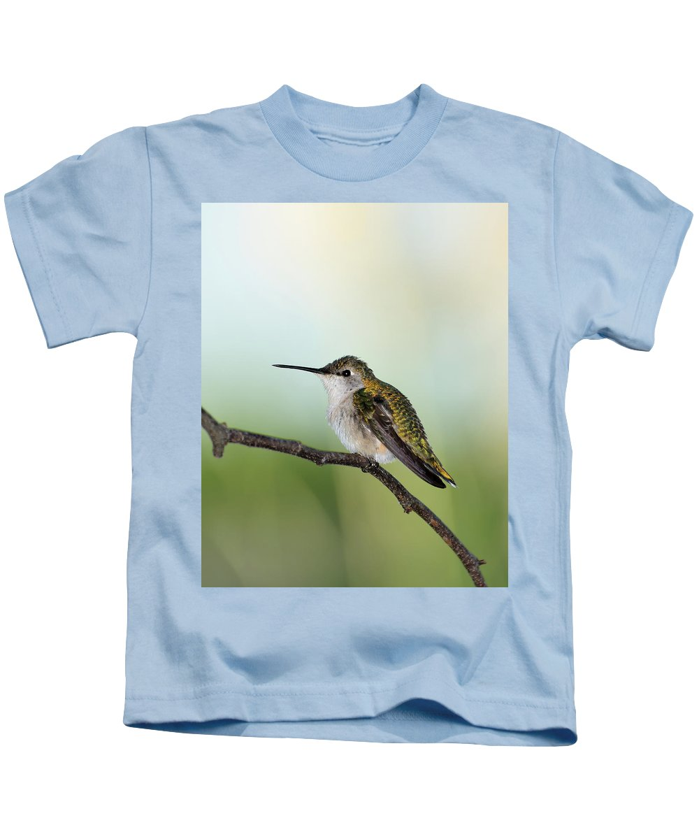 Ruby-throated Hummingbird Kids T-Shirt featuring the photograph At Rest 2 by Betty LaRue