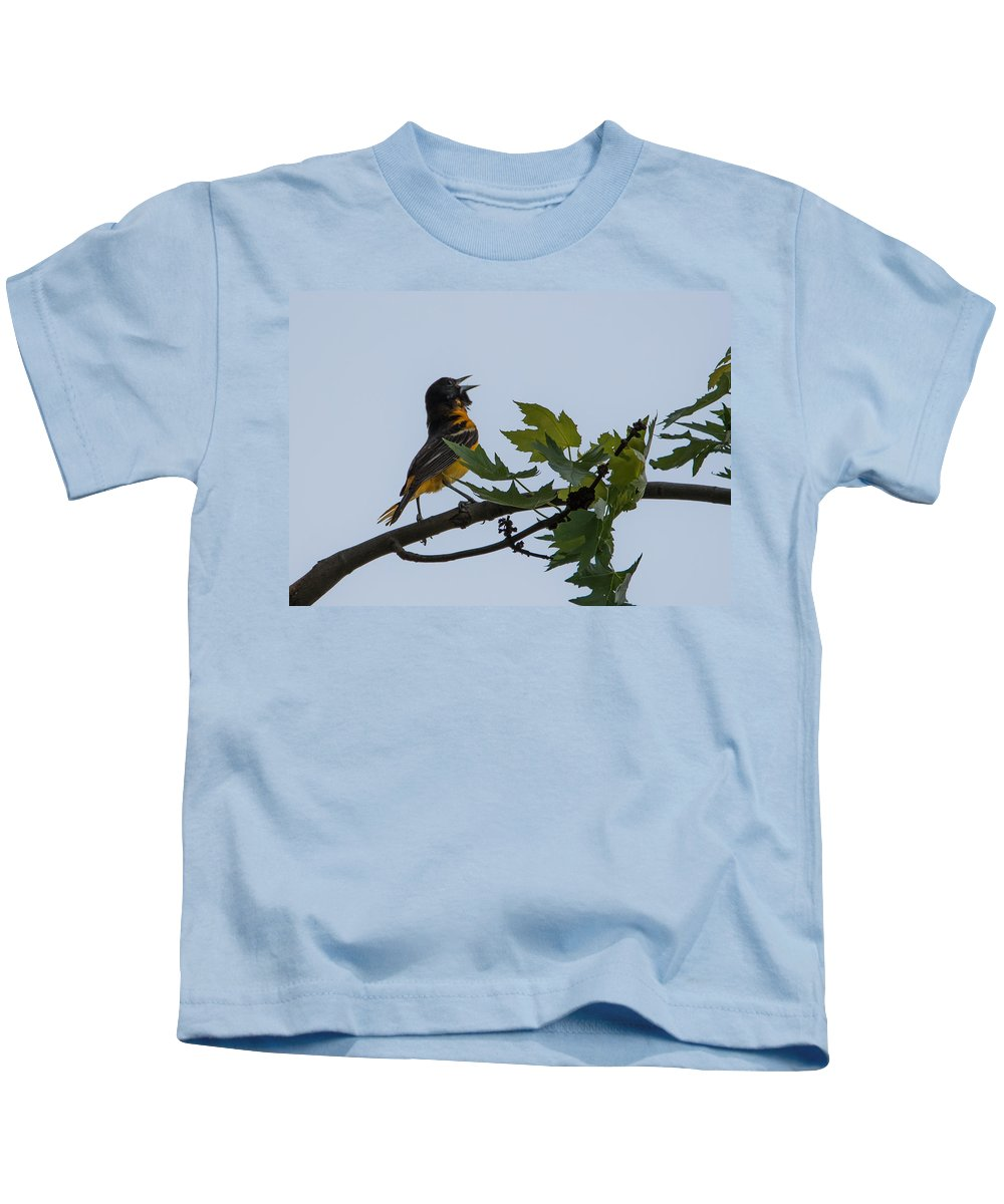 Baltimore Oriole Kids T-Shirt featuring the photograph Baltimore Oriole by Jan M Holden