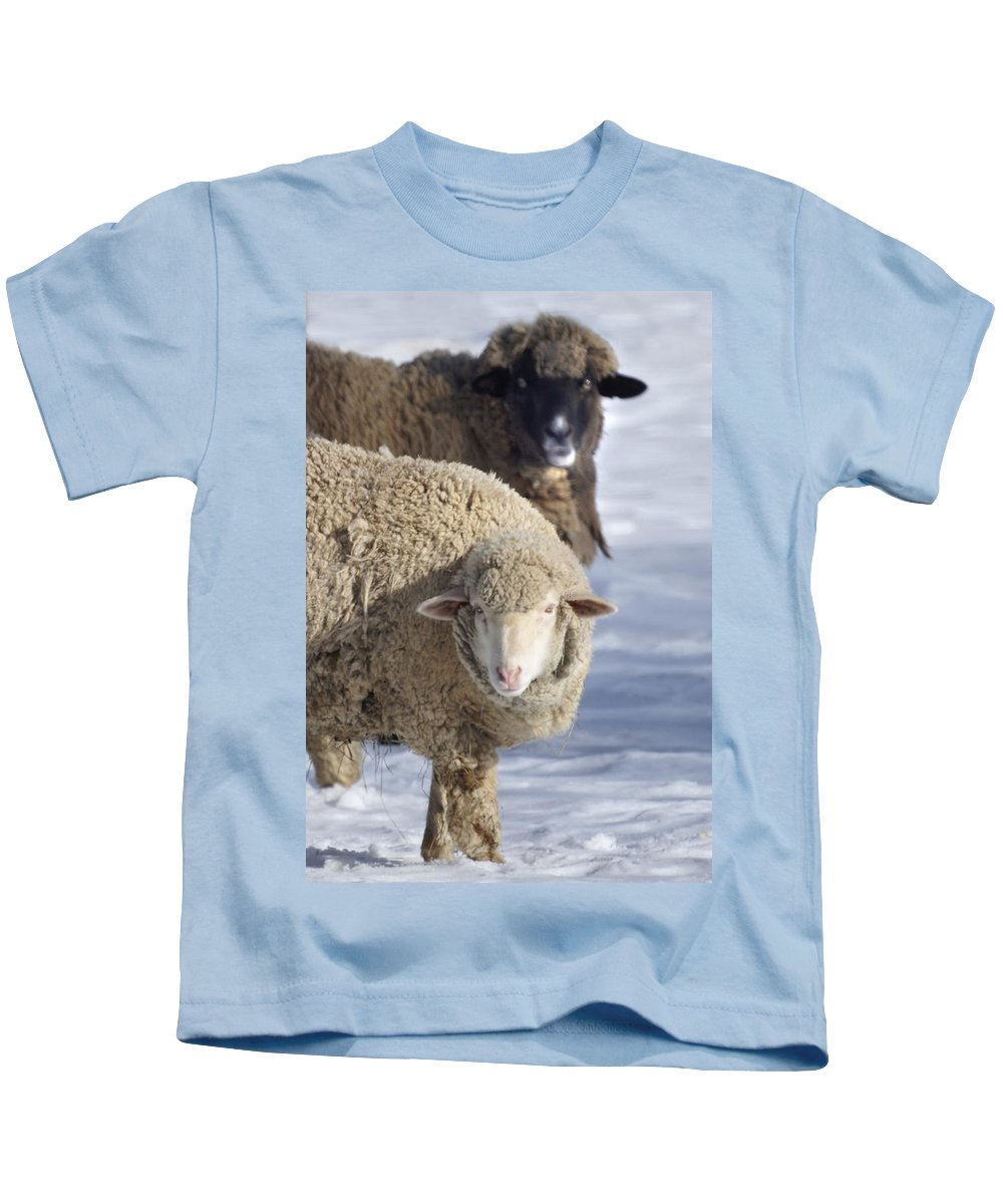 Sheep Kids T-Shirt featuring the photograph Black And White by Heather Coen