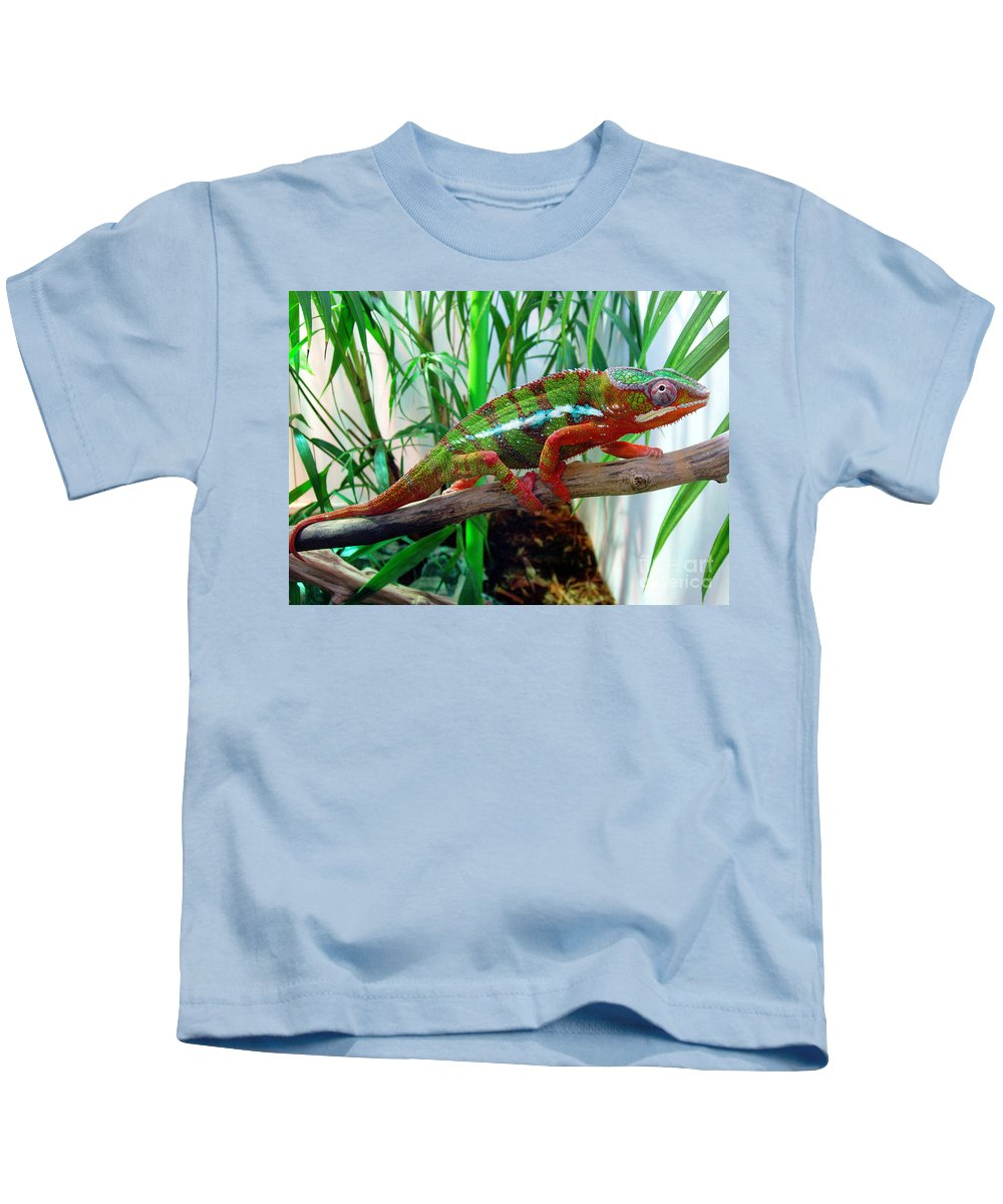 Chameleon Kids T-Shirt featuring the photograph Colorful Chameleon by Nancy Mueller