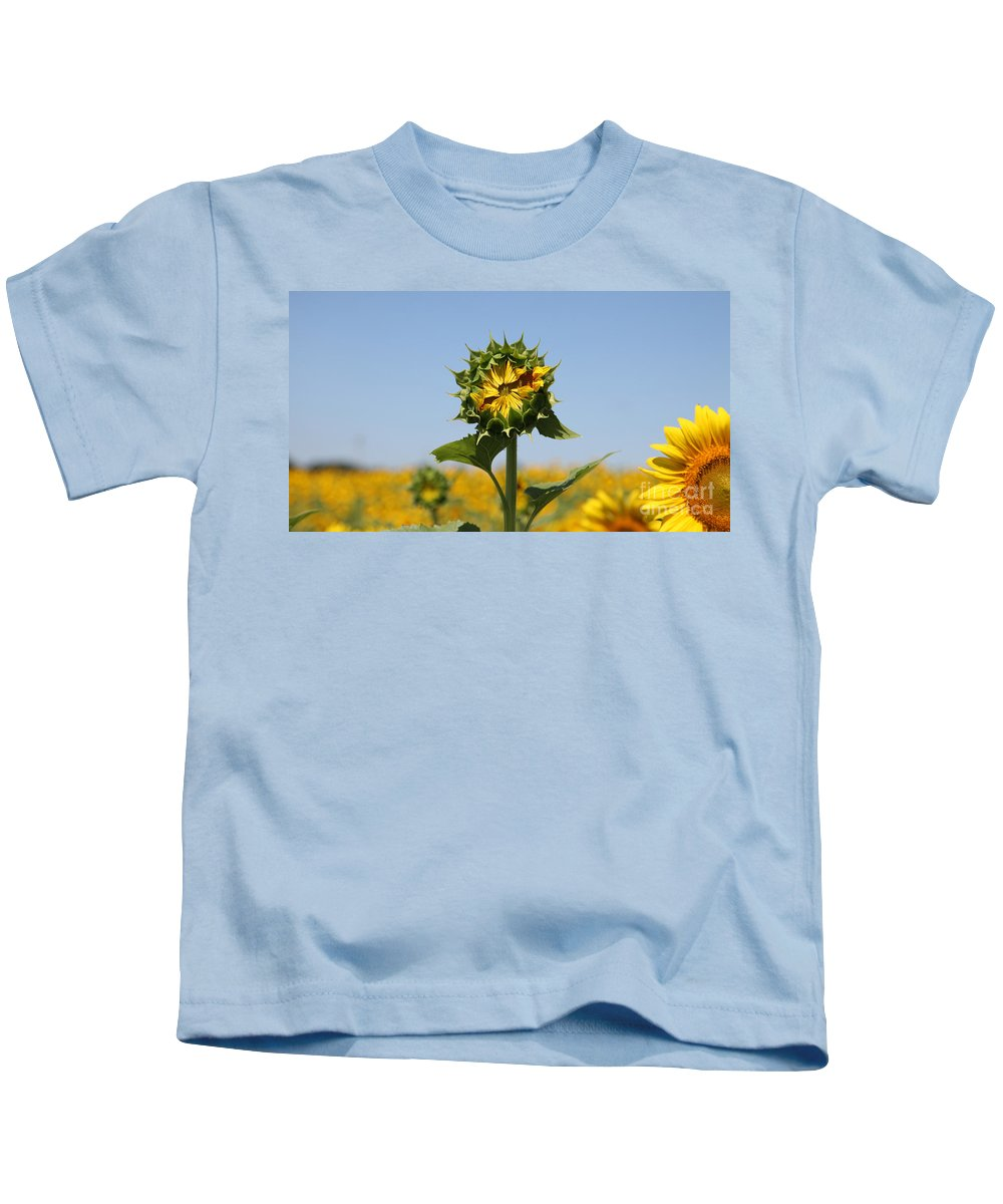 Sunflowers Kids T-Shirt featuring the photograph Competition by Amanda Barcon