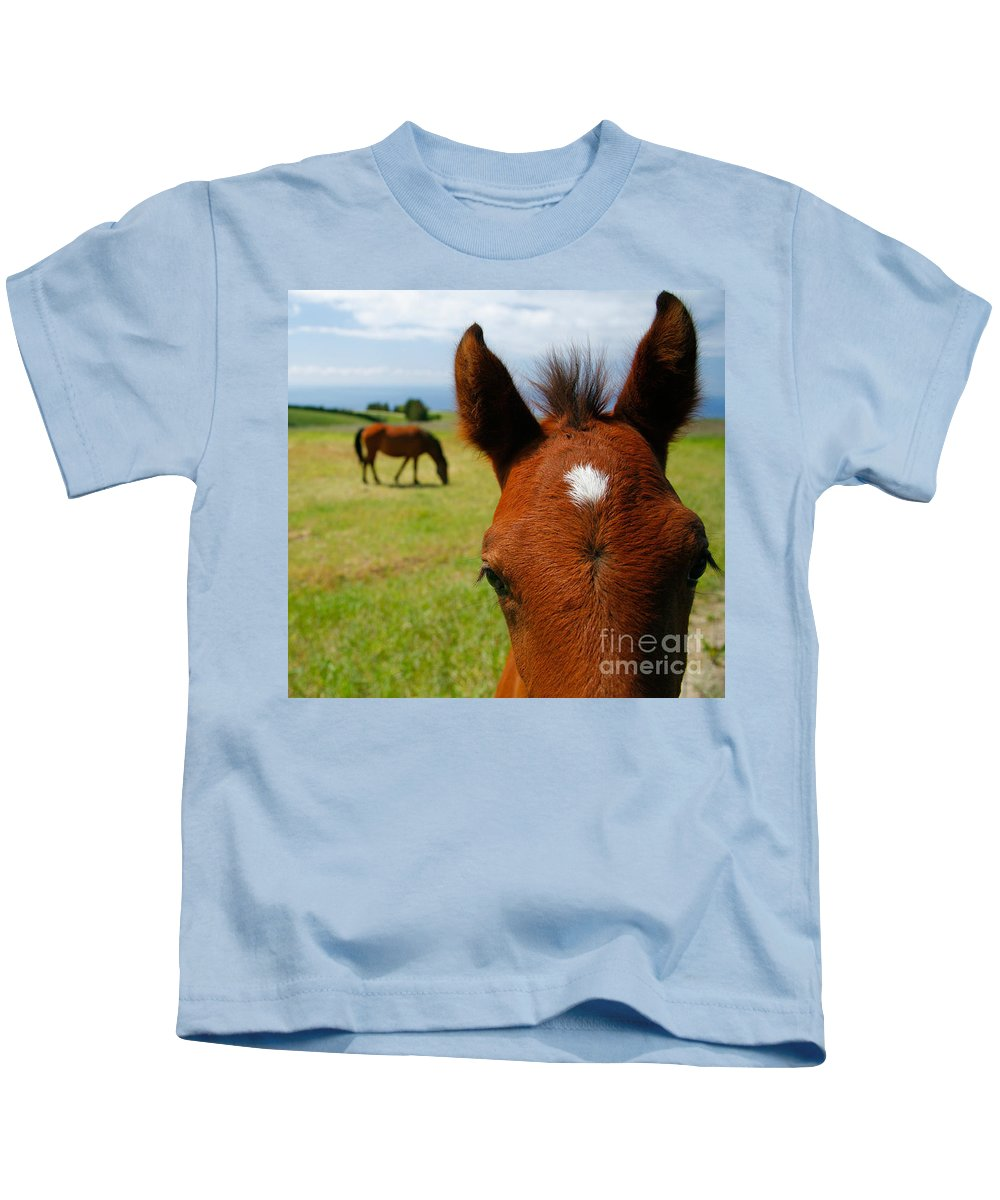 Farm Kids T-Shirt featuring the photograph Curious Colt by Gaspar Avila