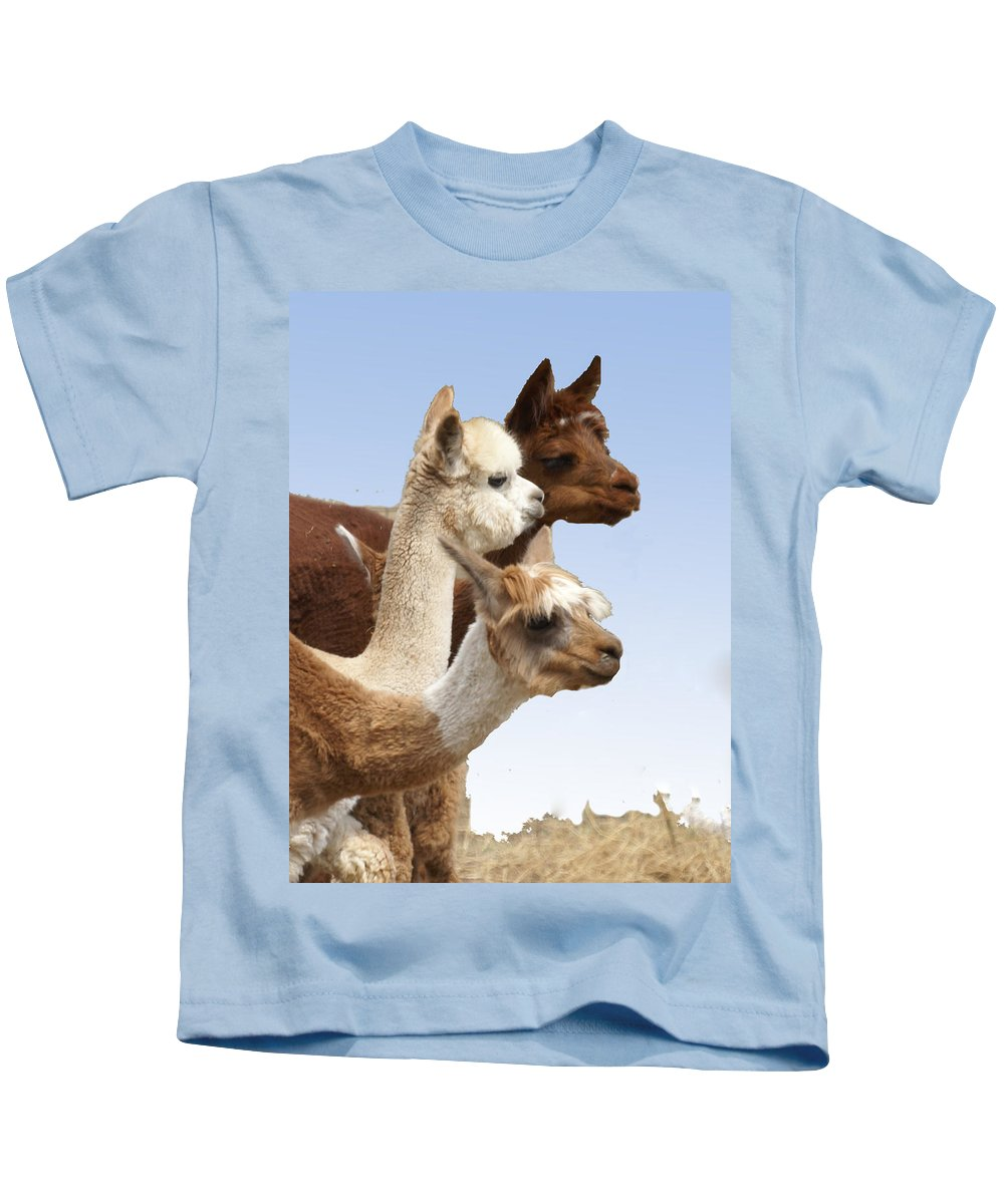 Llama Kids T-Shirt featuring the photograph Llama's Three by Heather Coen