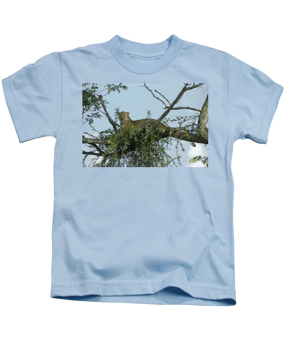 Africa Kids T-Shirt featuring the photograph Lounging Leopard by Michele Burgess