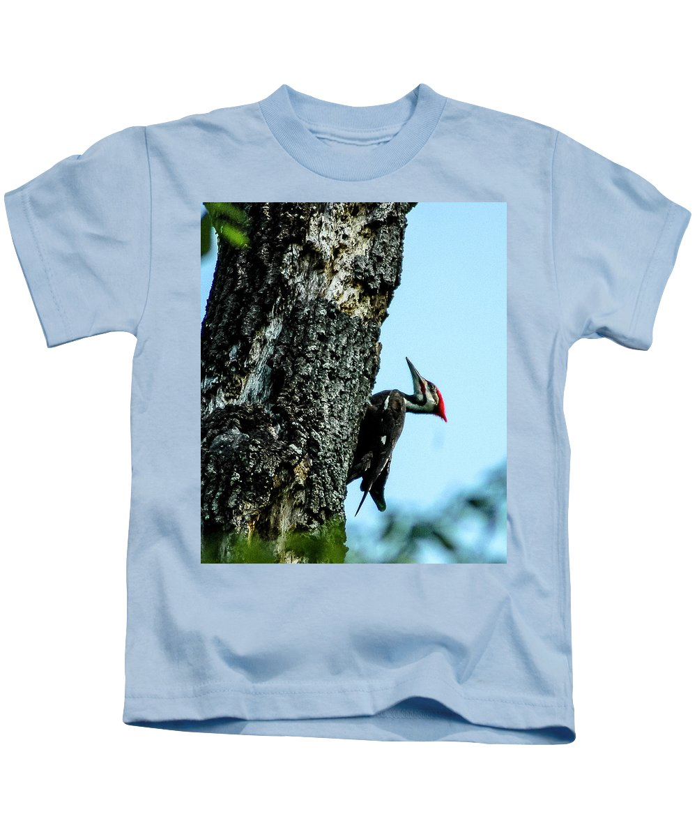 Pileated Woodpecker Kids T-Shirt featuring the photograph Male Pileated Woodpecker by Norman Johnson
