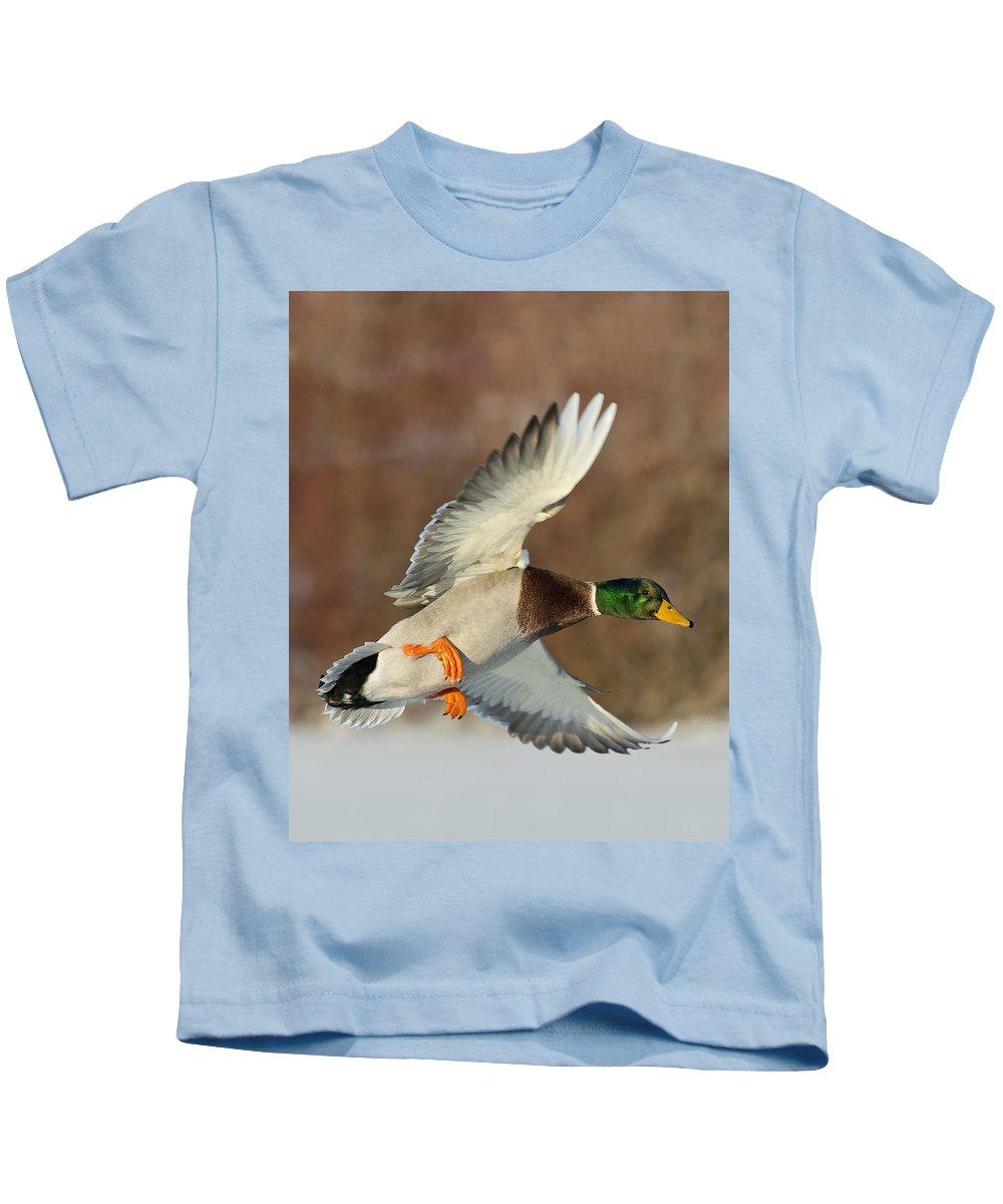 Mallard Kids T-Shirt featuring the photograph Mallard Duck by Steve Oehlenschlager
