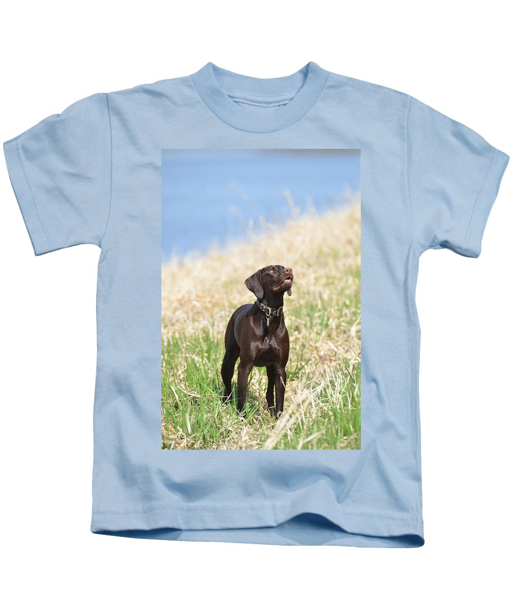 German Shorthaired Pointer Kids T-Shirt featuring the photograph New Land by Tammy Mutka