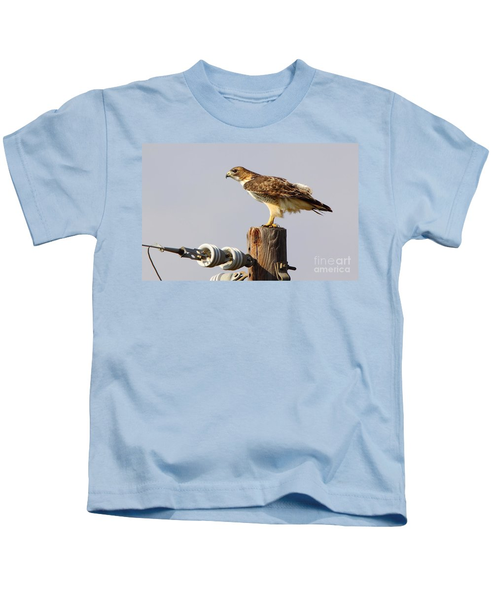 Animal Kids T-Shirt featuring the photograph Red Tailed Hawk Perched by Robert Frederick