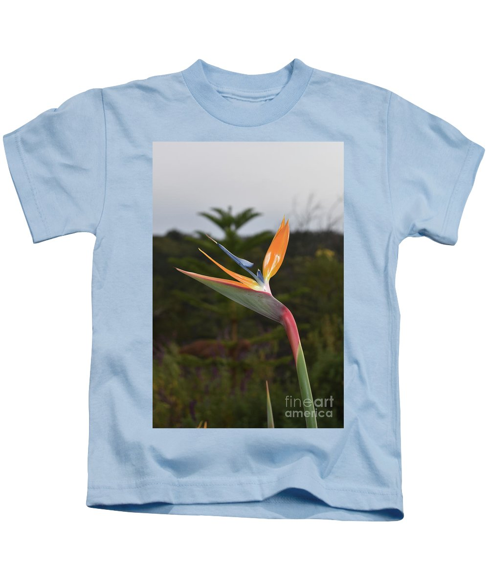 Bird-of-paradise Kids T-Shirt featuring the photograph Side View Of A Beautiful Bird Of Paradise Flower by DejaVu Designs